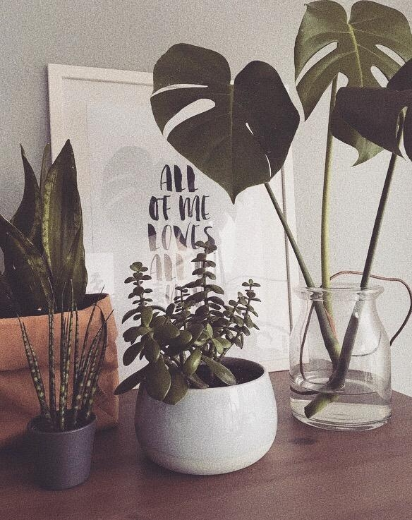 🌿🌵 #livingchallenge #plantlover #green #plants #home