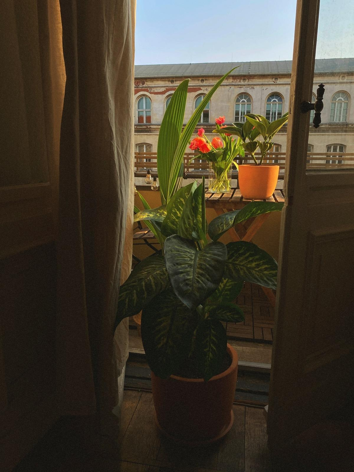 All the best for the plants. #plantgang #home #living #balcony
