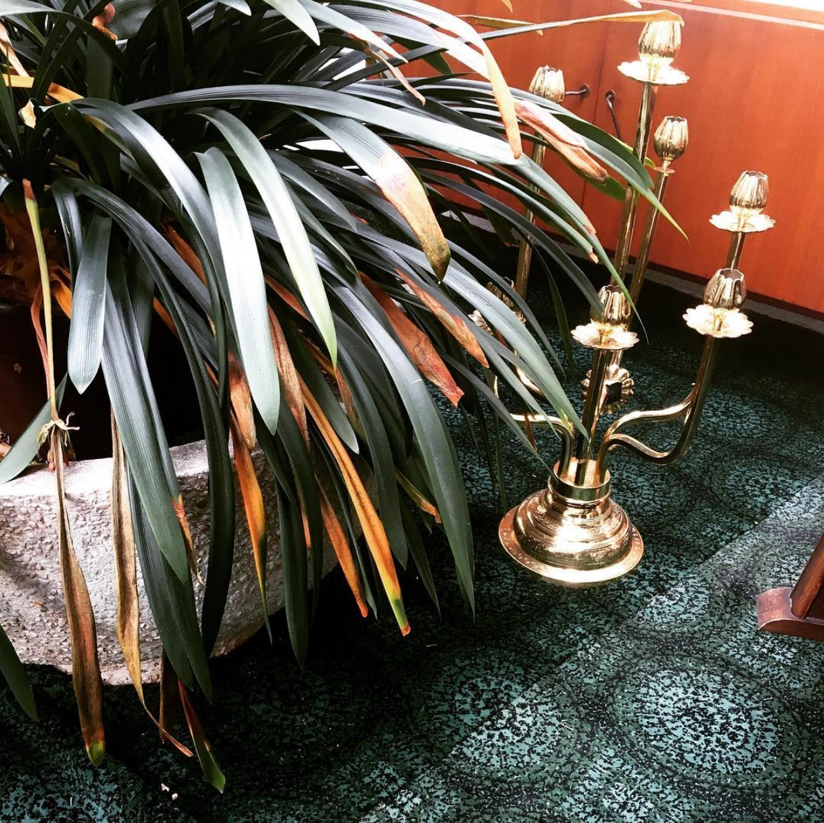 Beautiful details #parkhotel1970 🌿 #plants #plantlover #interior #hotel #details