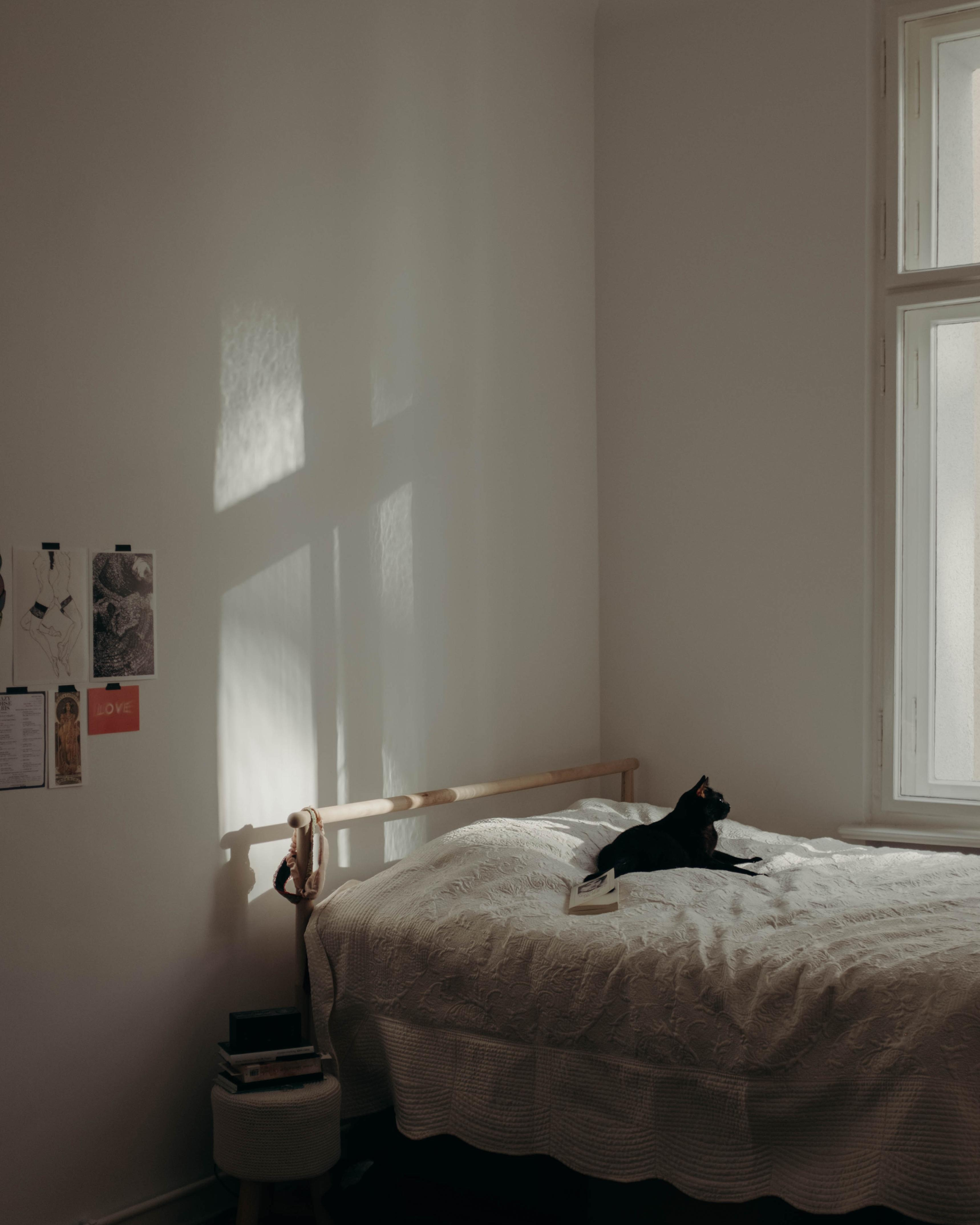 bedroom stories with Ozzy #bedroom #homestory #livingwithcats