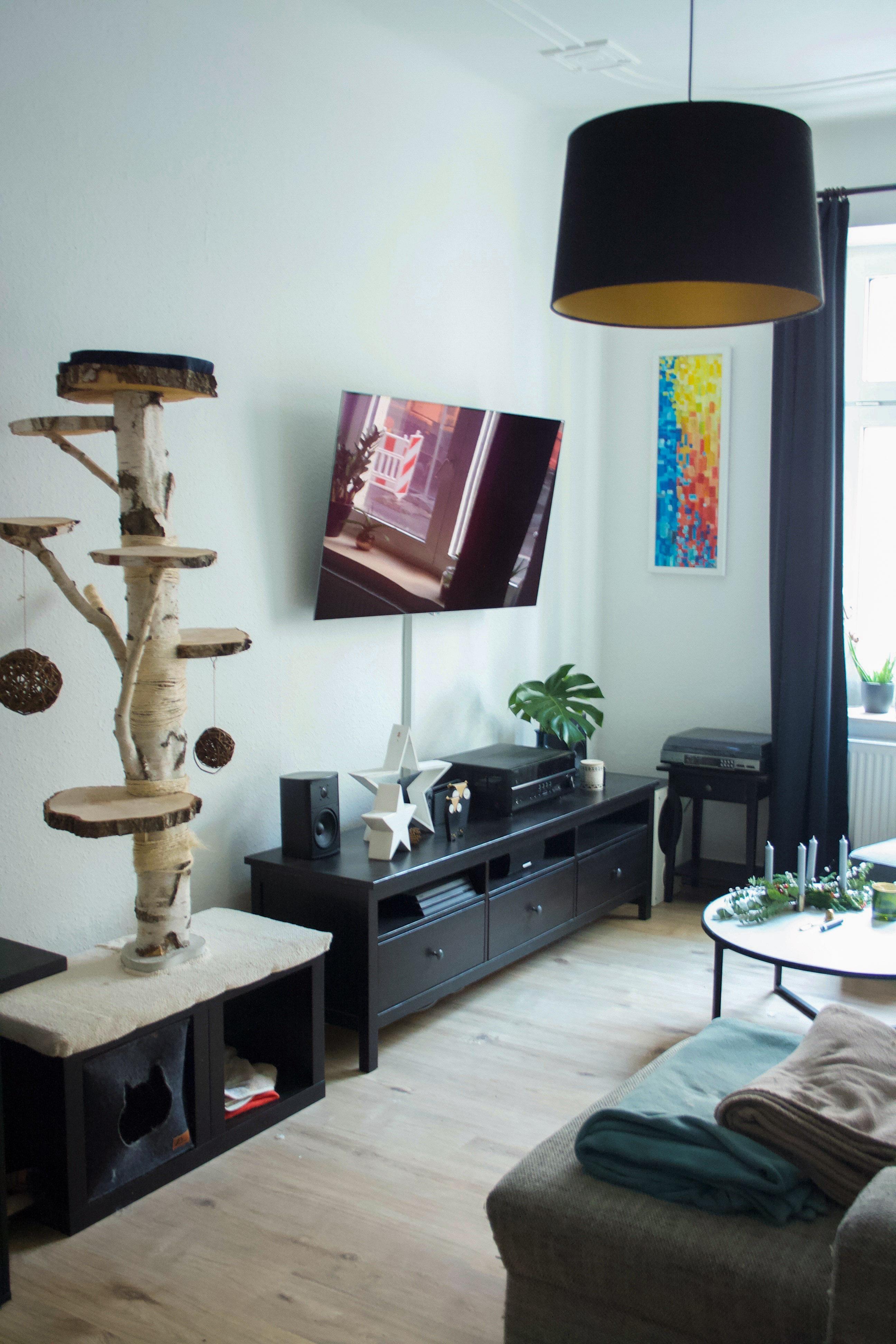 Kratzbaum Bilder Ideen Couch