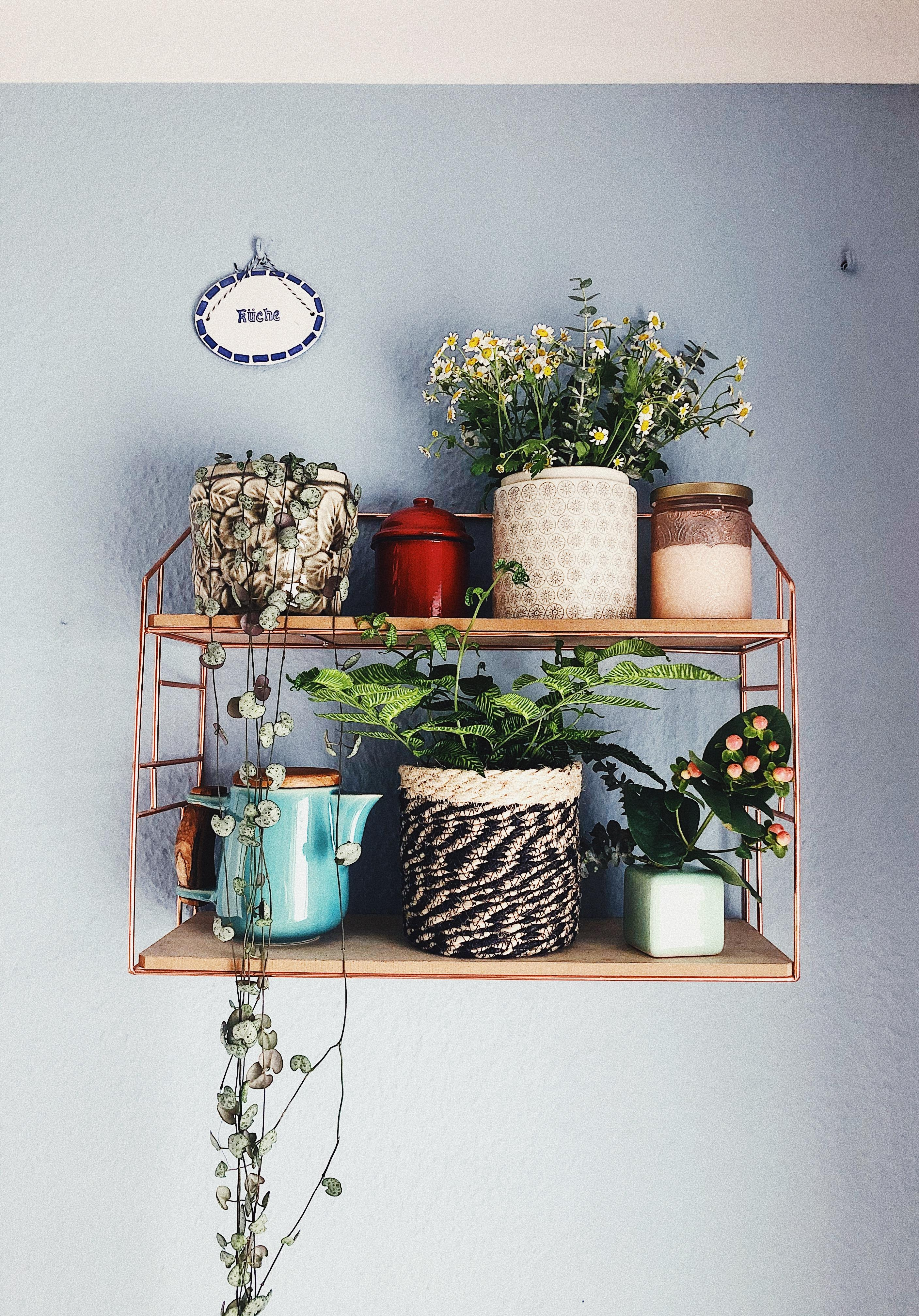 BELOVED GANG 