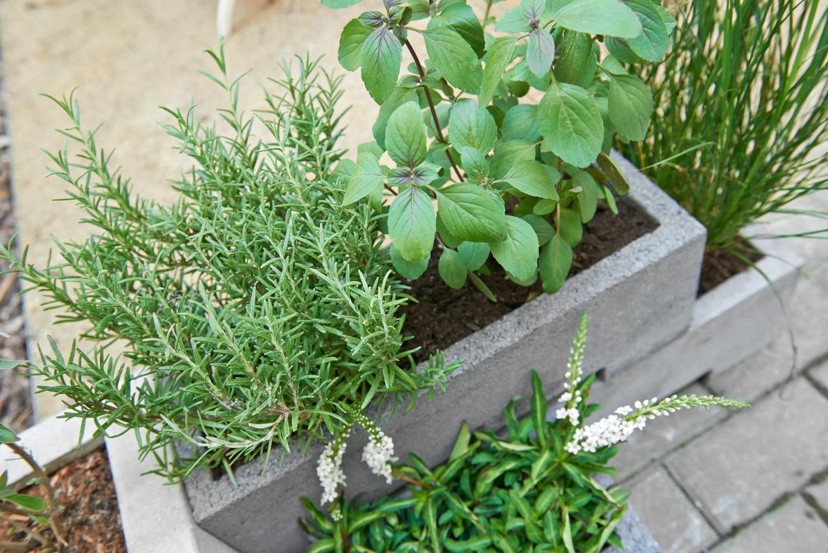 bioland kr uter von evrgreen im beton balkonkasten. Black Bedroom Furniture Sets. Home Design Ideas