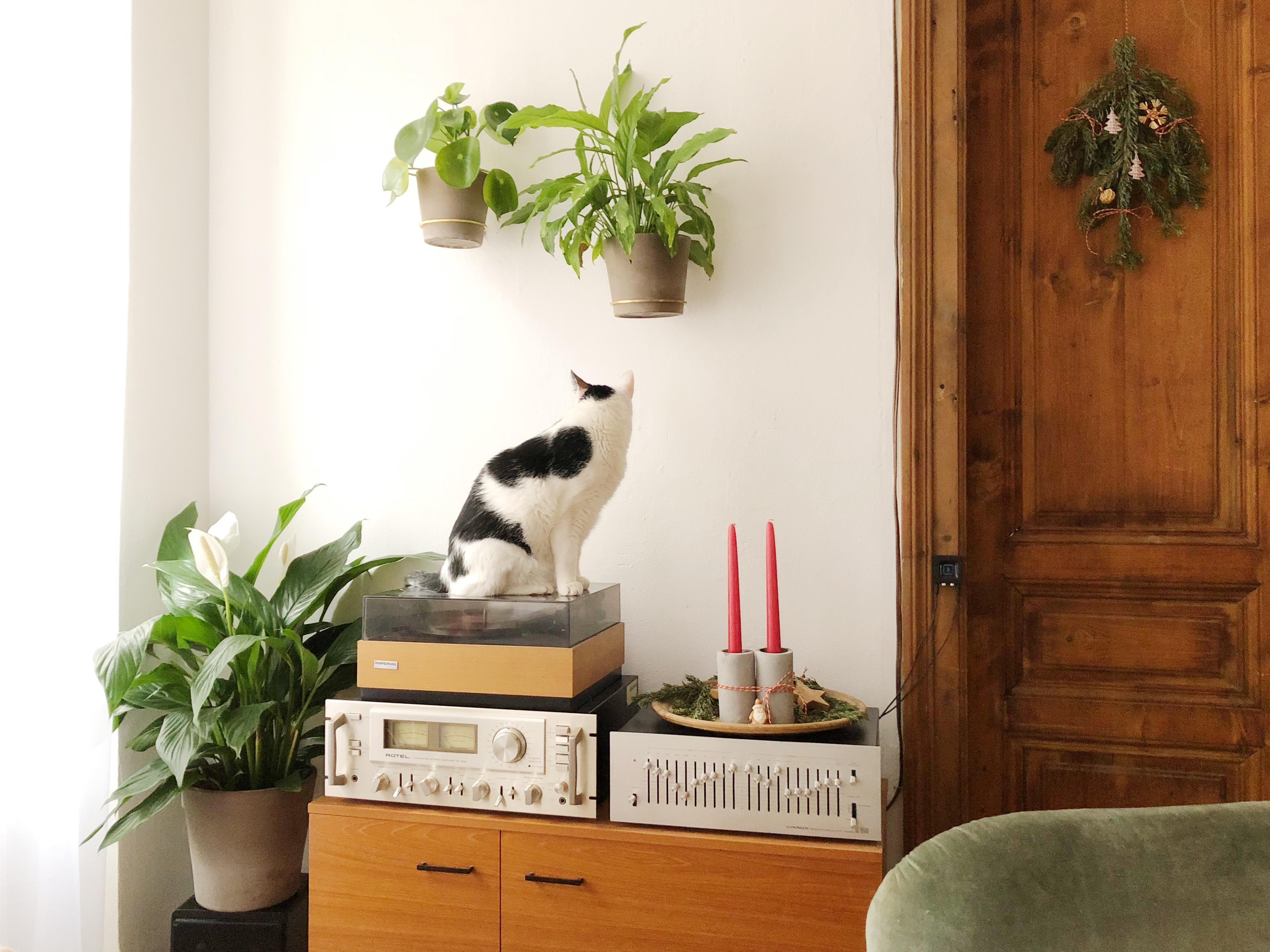 Wandhalterung bilder ideen couch for Wandhalterung pflanzen