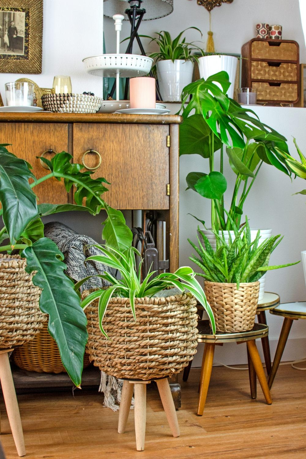 Bohemian Urban Jungle mit Midcentury Flair