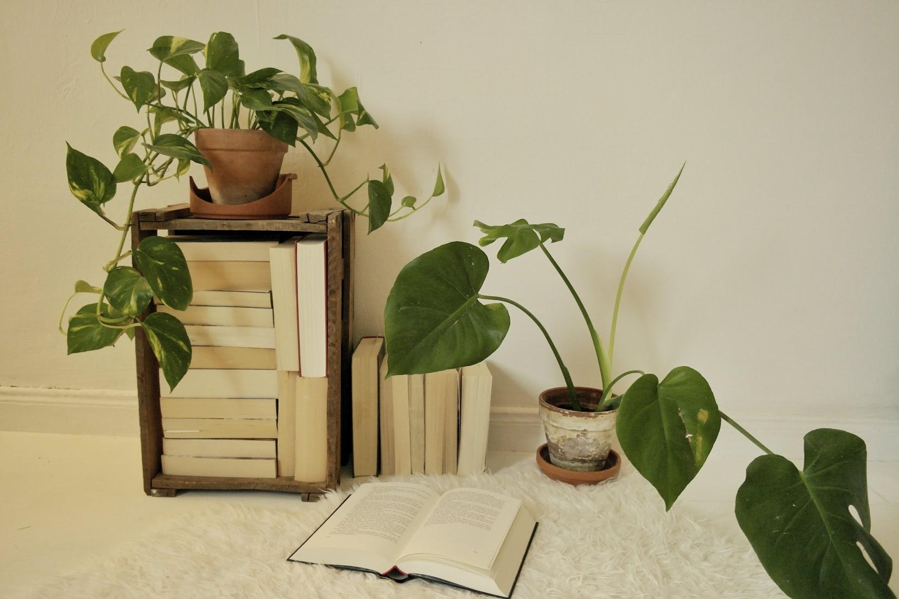 #books #plants #roomdecor #white #decor #room