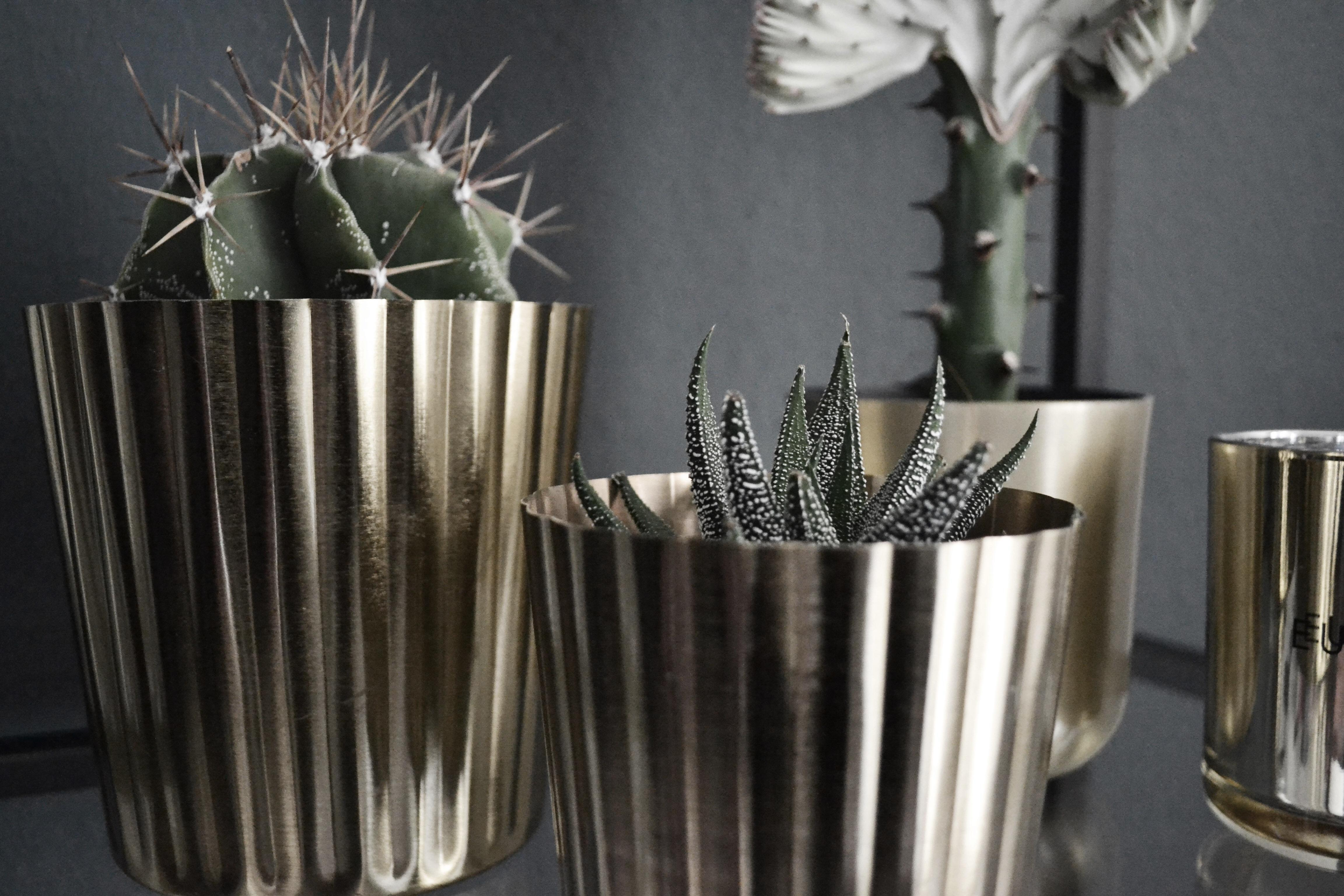#cactusclub