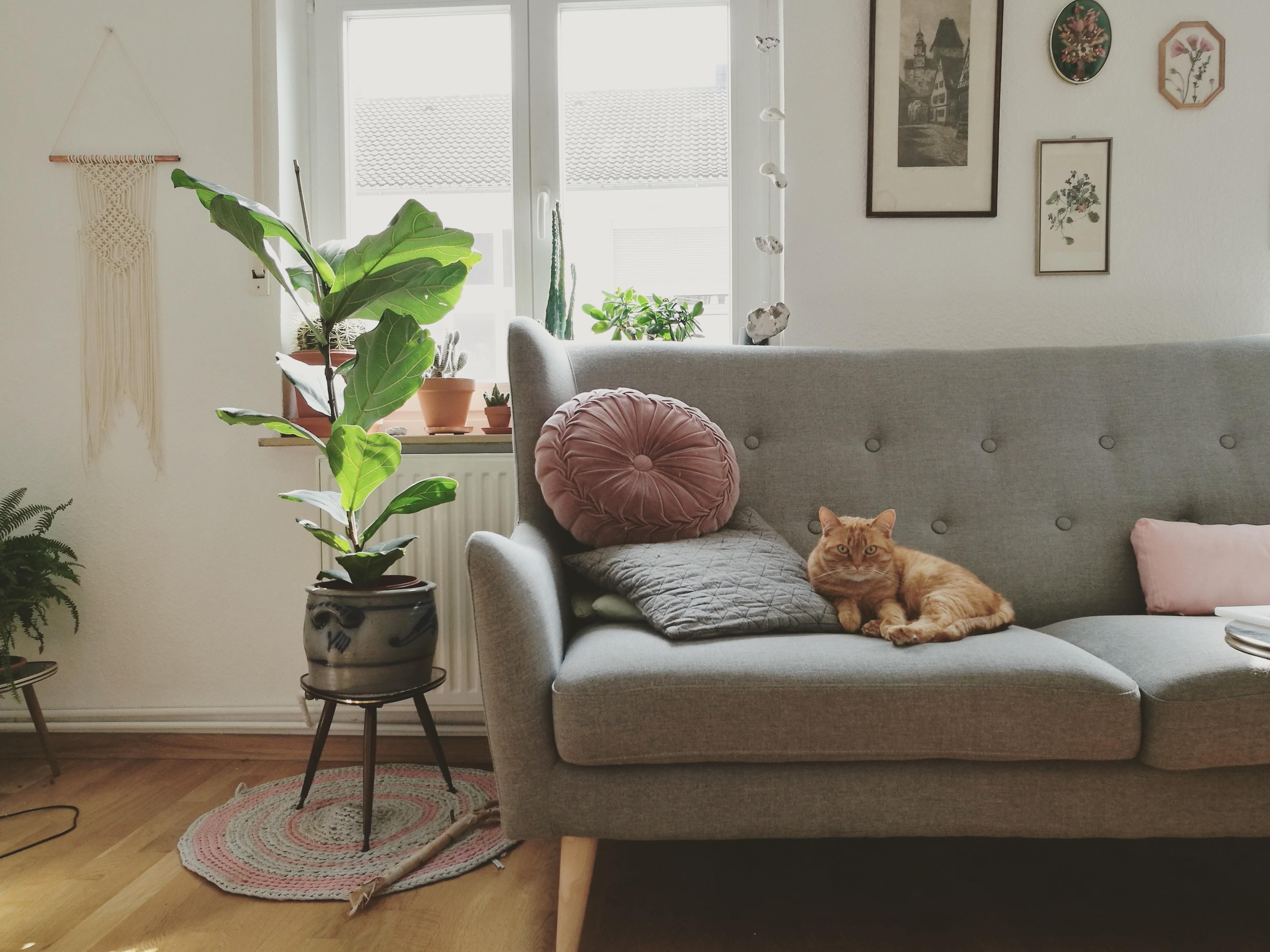 Couch katze cat ginger wohnzimmer  115c97c5 4c63 46b1 a2ab 81749520a4fb