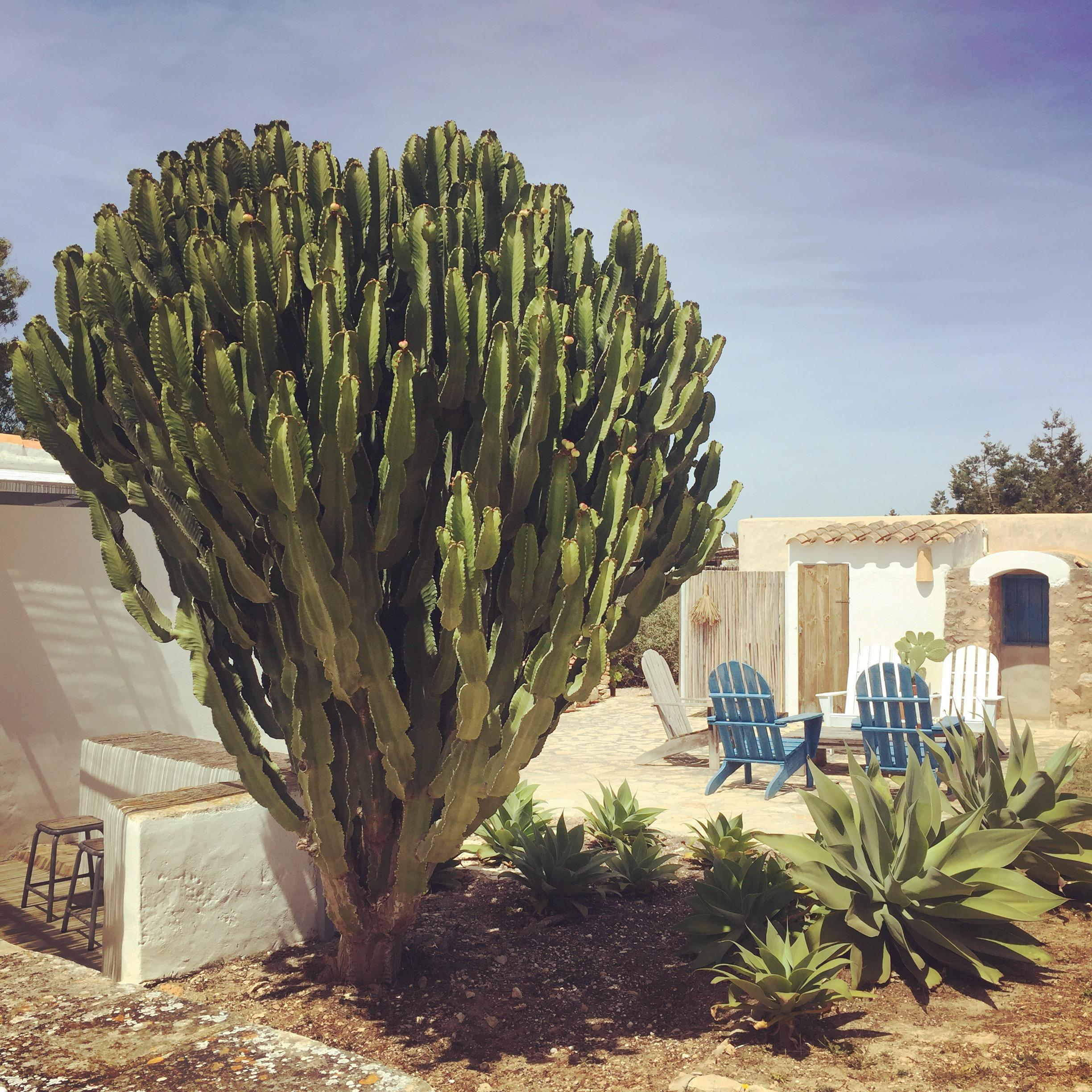 #couchstyle #formentera #holiday #summerhouse #cactus