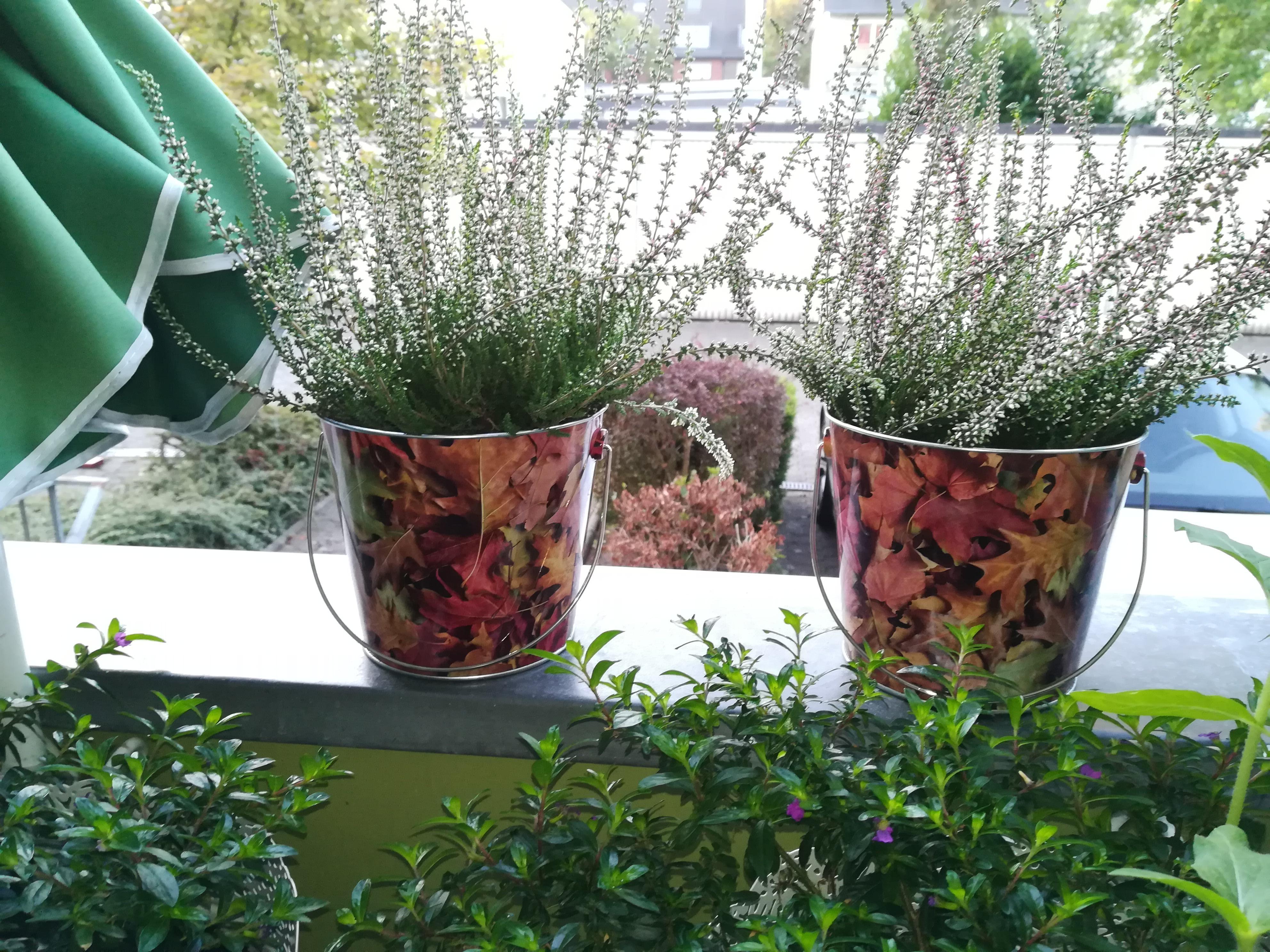 Blumentopf: Inspiration rund um Blumentöpfe bei COUCH!