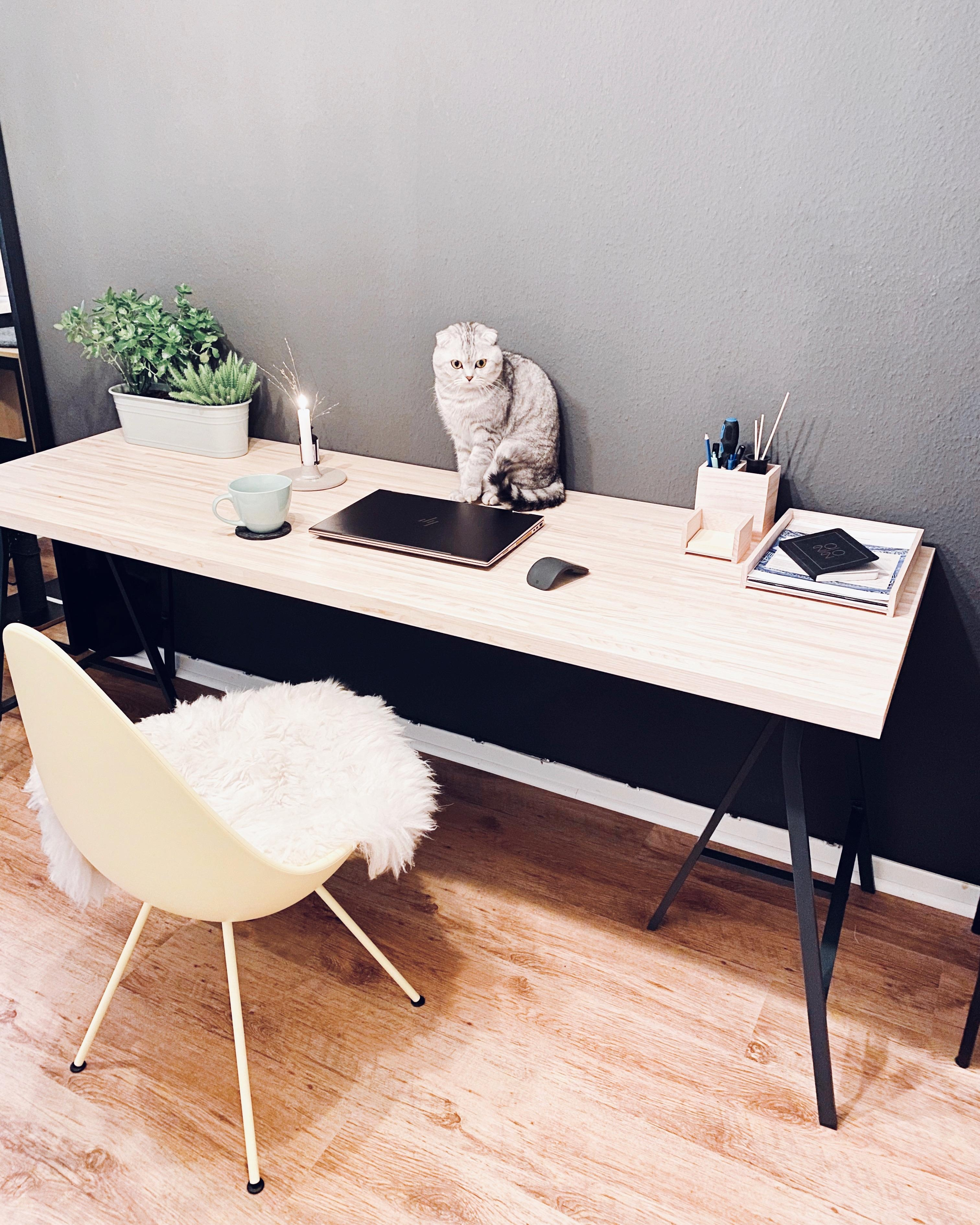 Der alltag hat uns wieder  workingspace interior nordicroom scandinavianliving hygge catlover plantlover  7498f83b b7fb 4354 853a 1f5f1ee56232