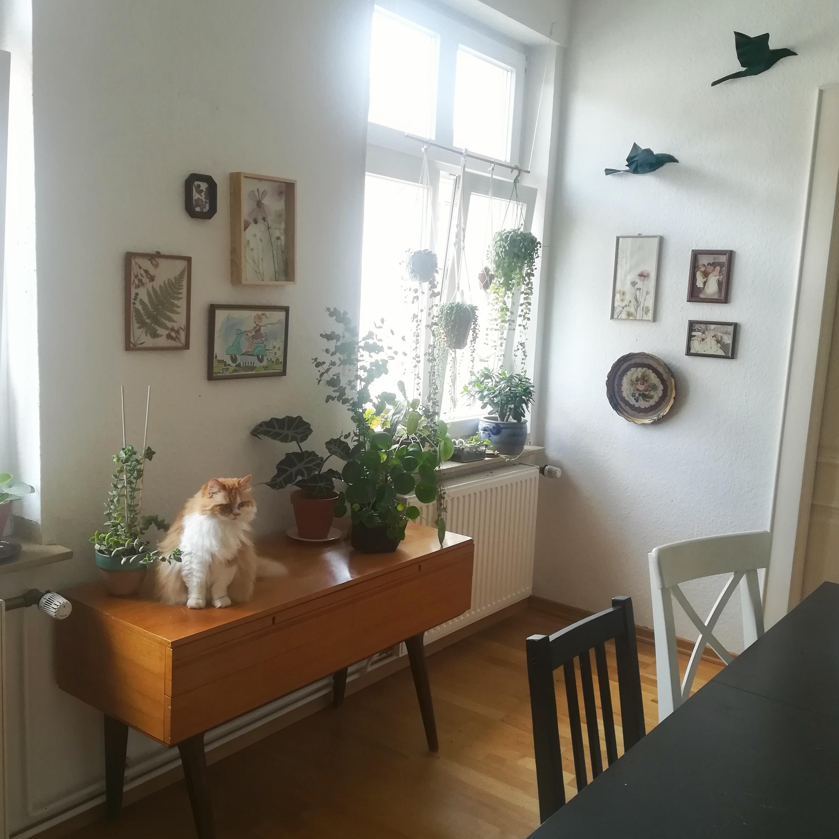 Alter Schrank Wohnzimmer Schöner Alter Schrank Aus Den 60er Jahren ...