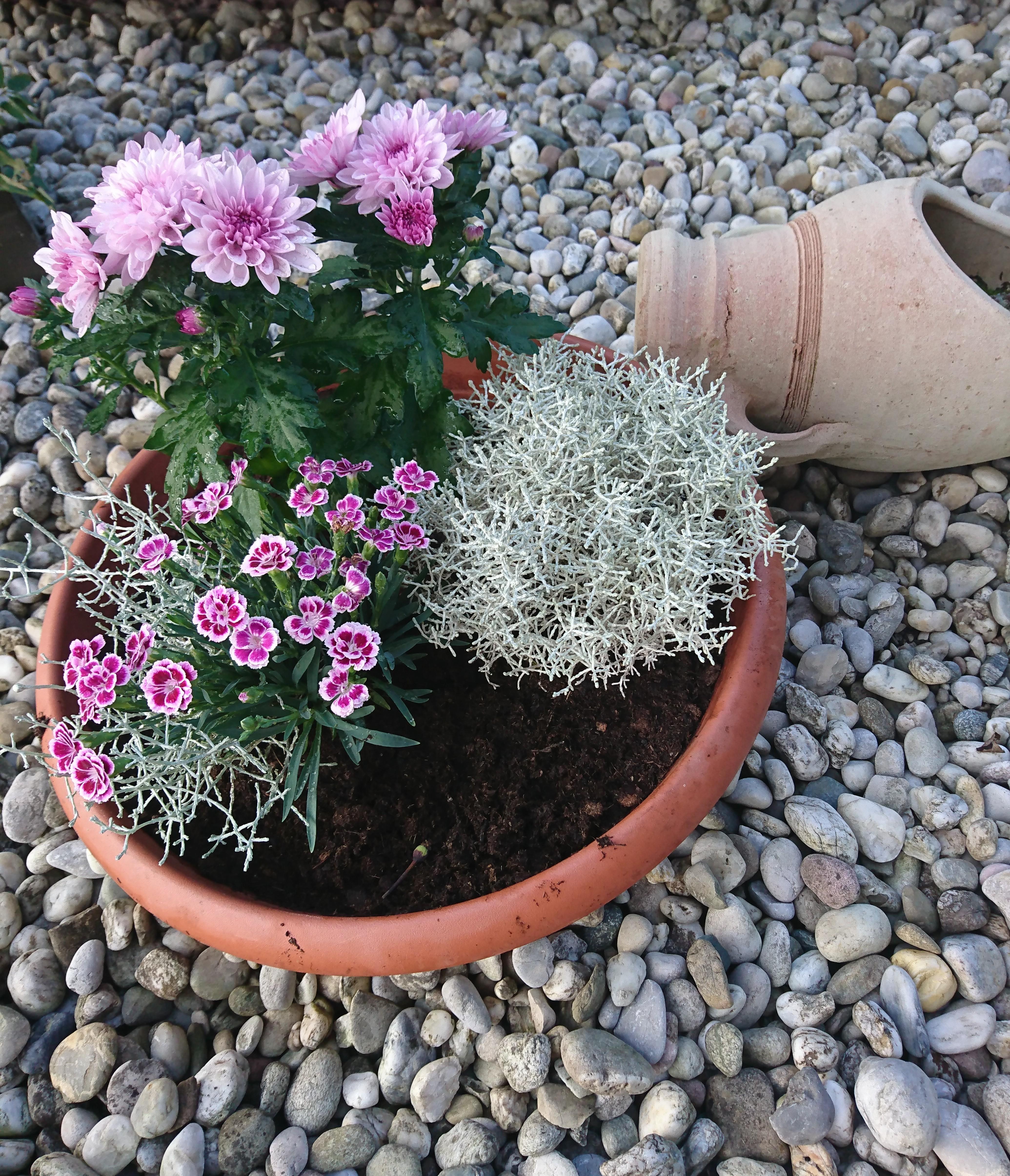 Ein Bissen Farbe Fur Den Vorgarten Blumen Bunt