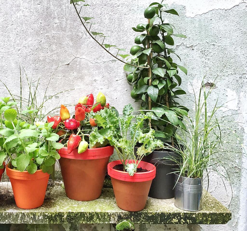 Gartendeko Selber Machen Bilder Ideen Couch