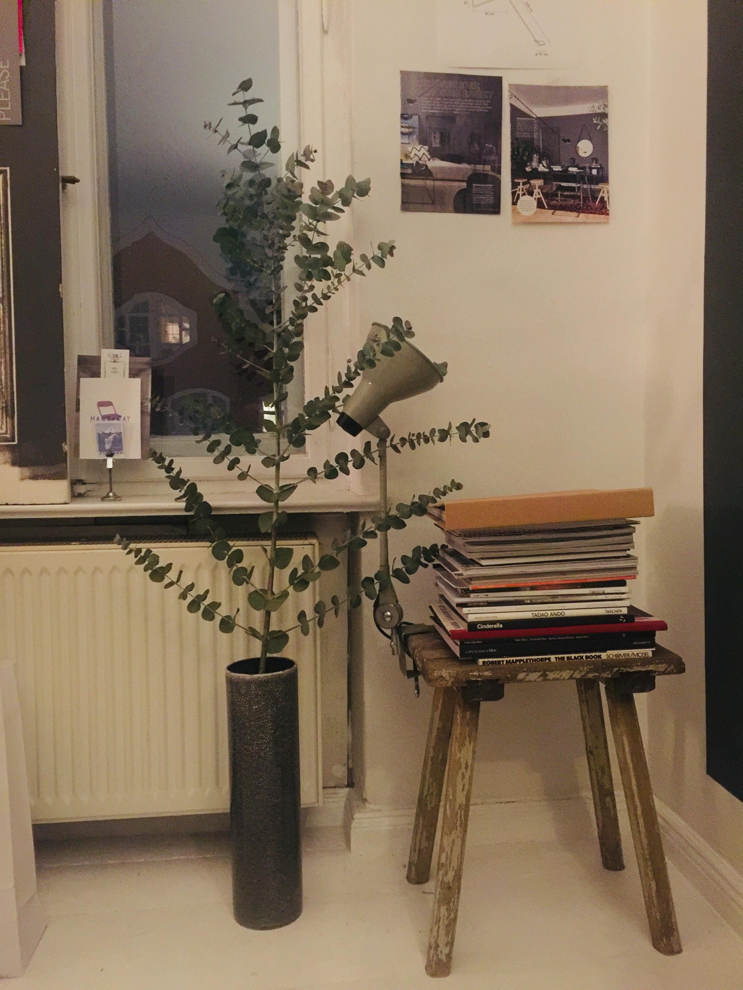 Eukalyptus#vintage stool#by day