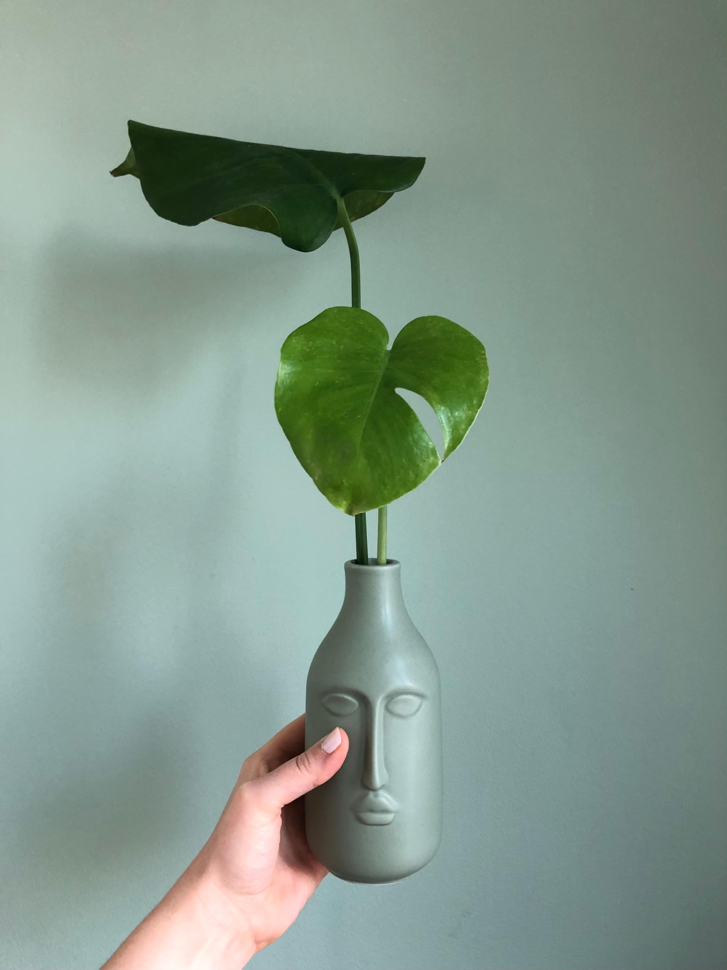 Face-Vase #vase #facevase #monstera