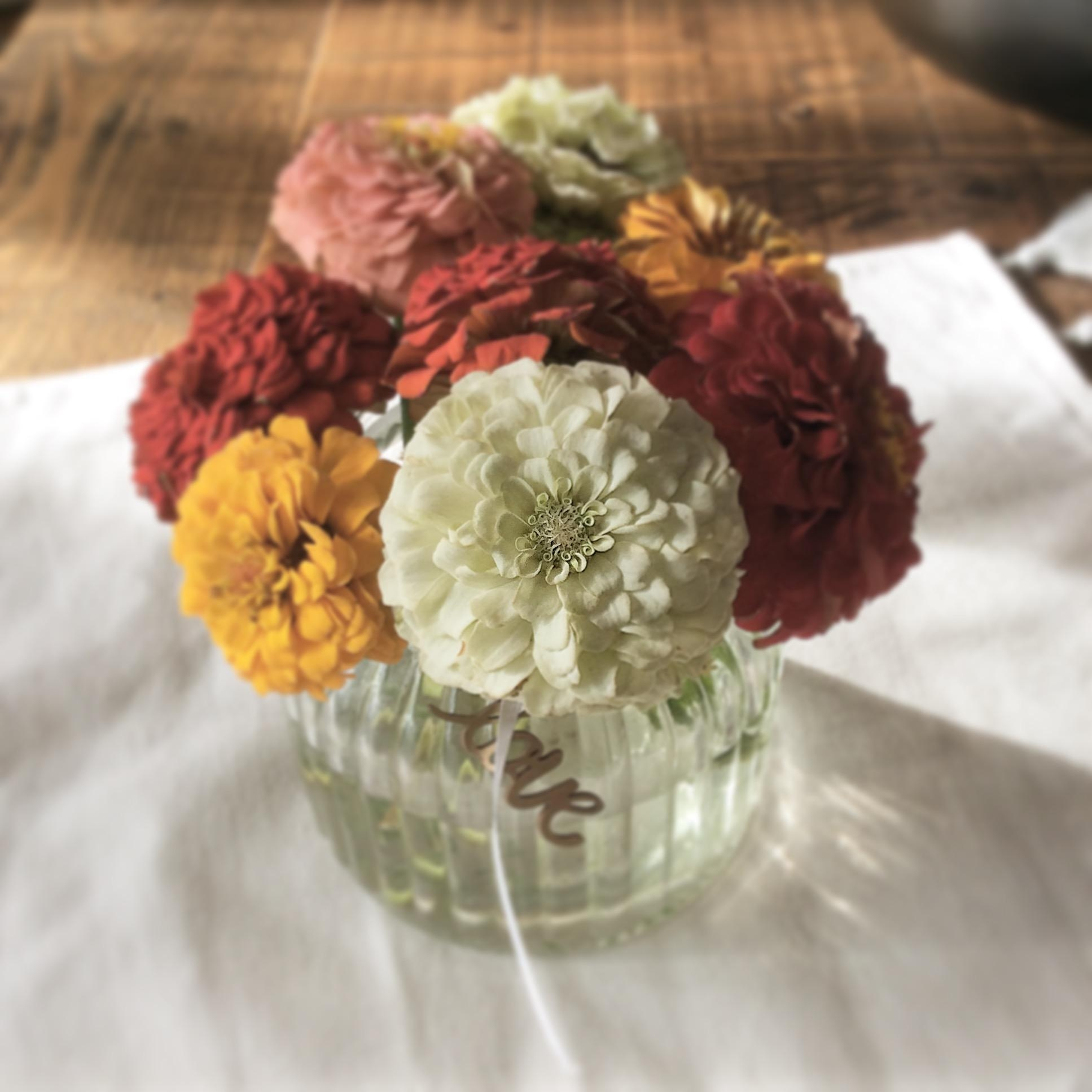 #freshflowerfriday #zinnien