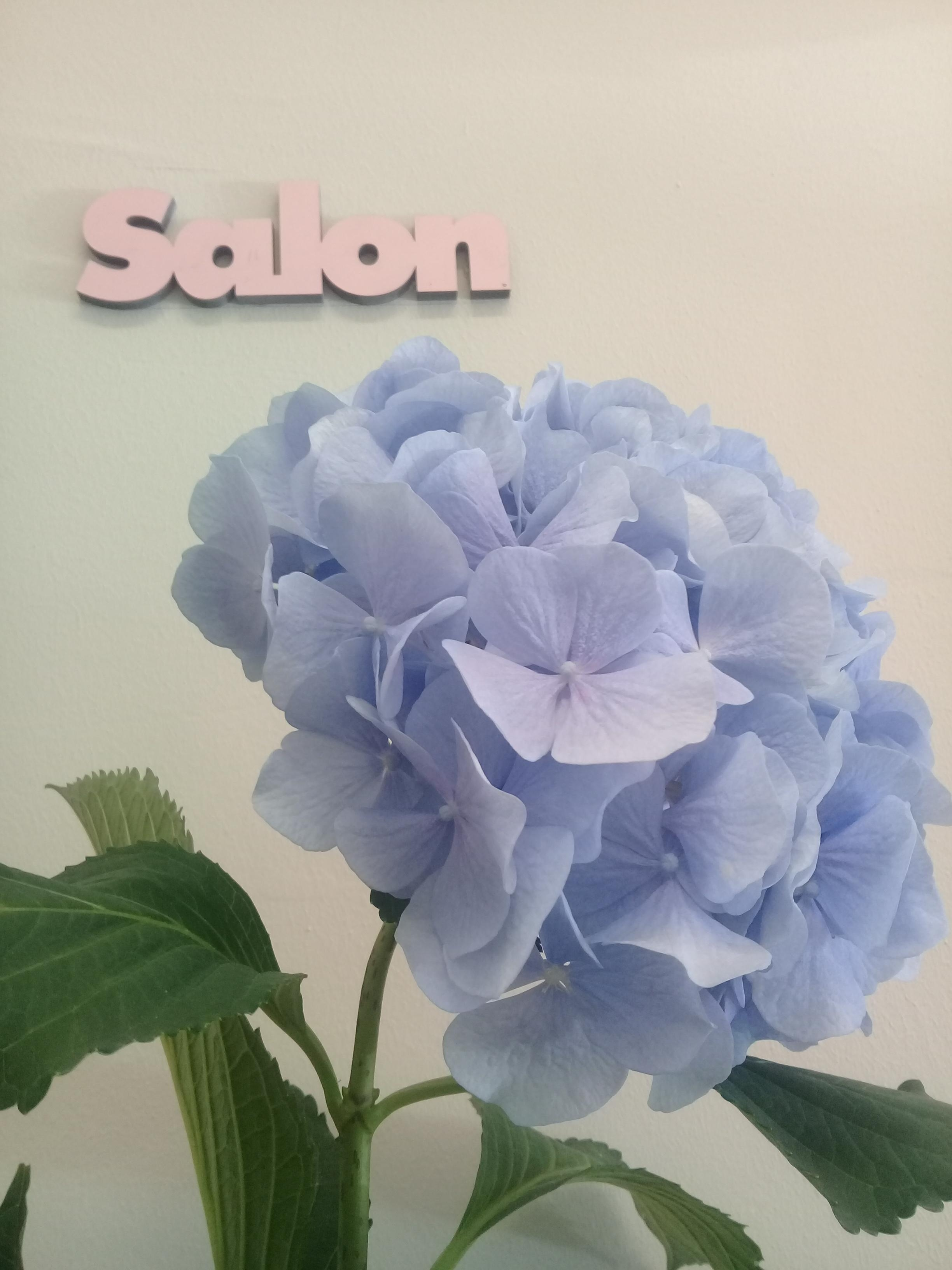 #freshflowerfriday#hortensien#salon