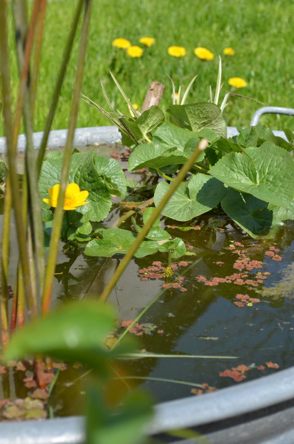 Fruhling In Der Badewanne Gartenteich Gartendeko C
