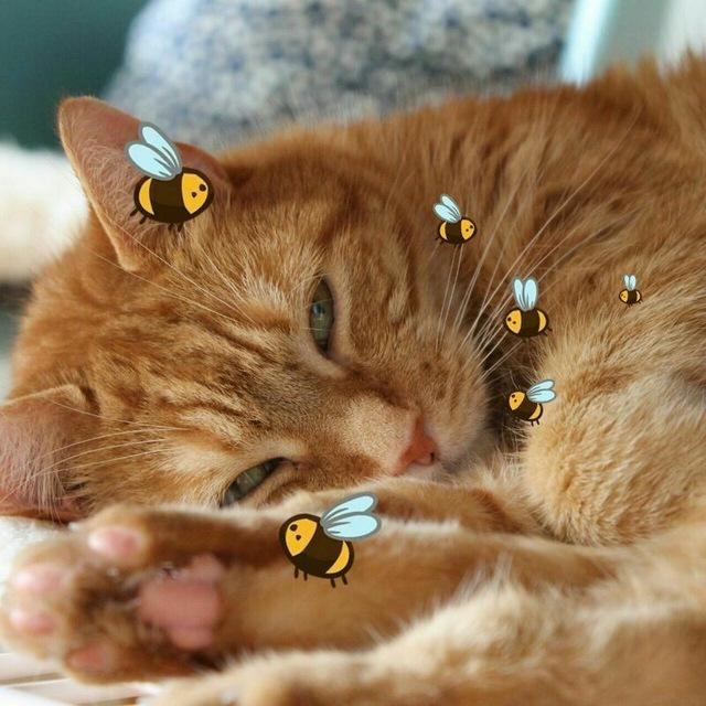 Ginger.Bee