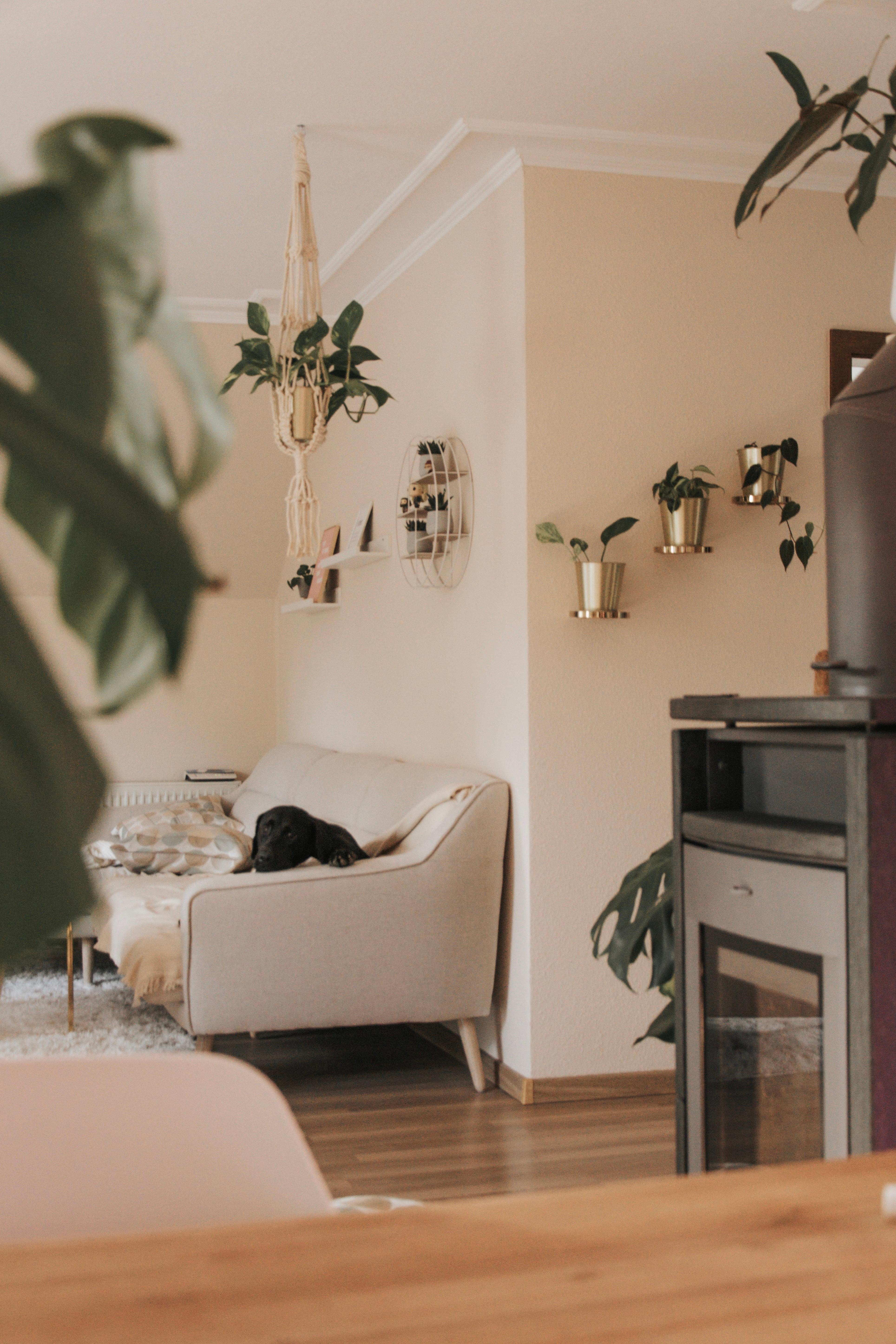 Gold, creme und grün. Die perfekte Kombi. #wohnzimme...