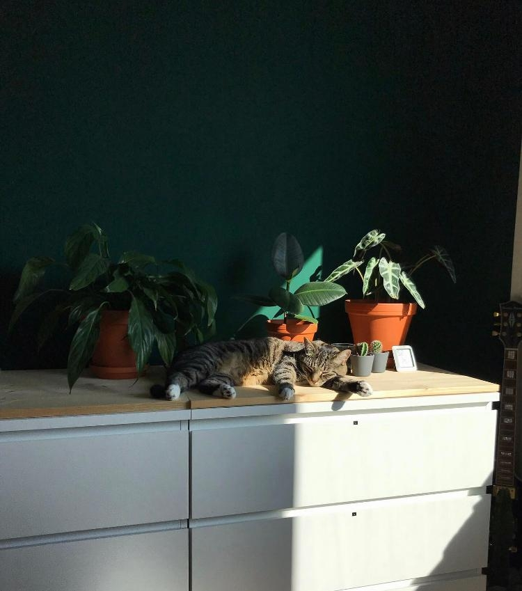 green mood.