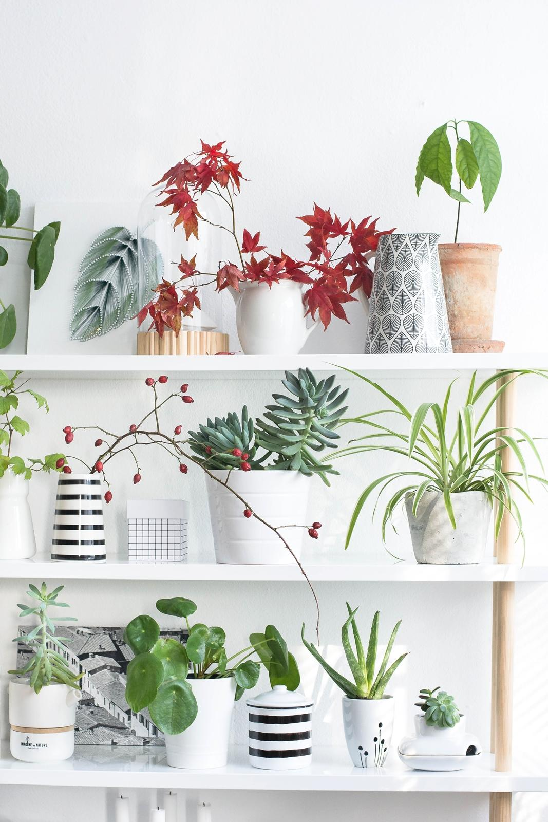 Greenery plantshelfie shelfie diy regal urbanjungle pilea succulents avocado plants  fca0f649 6df2 45fe 8730 cd5027b95985