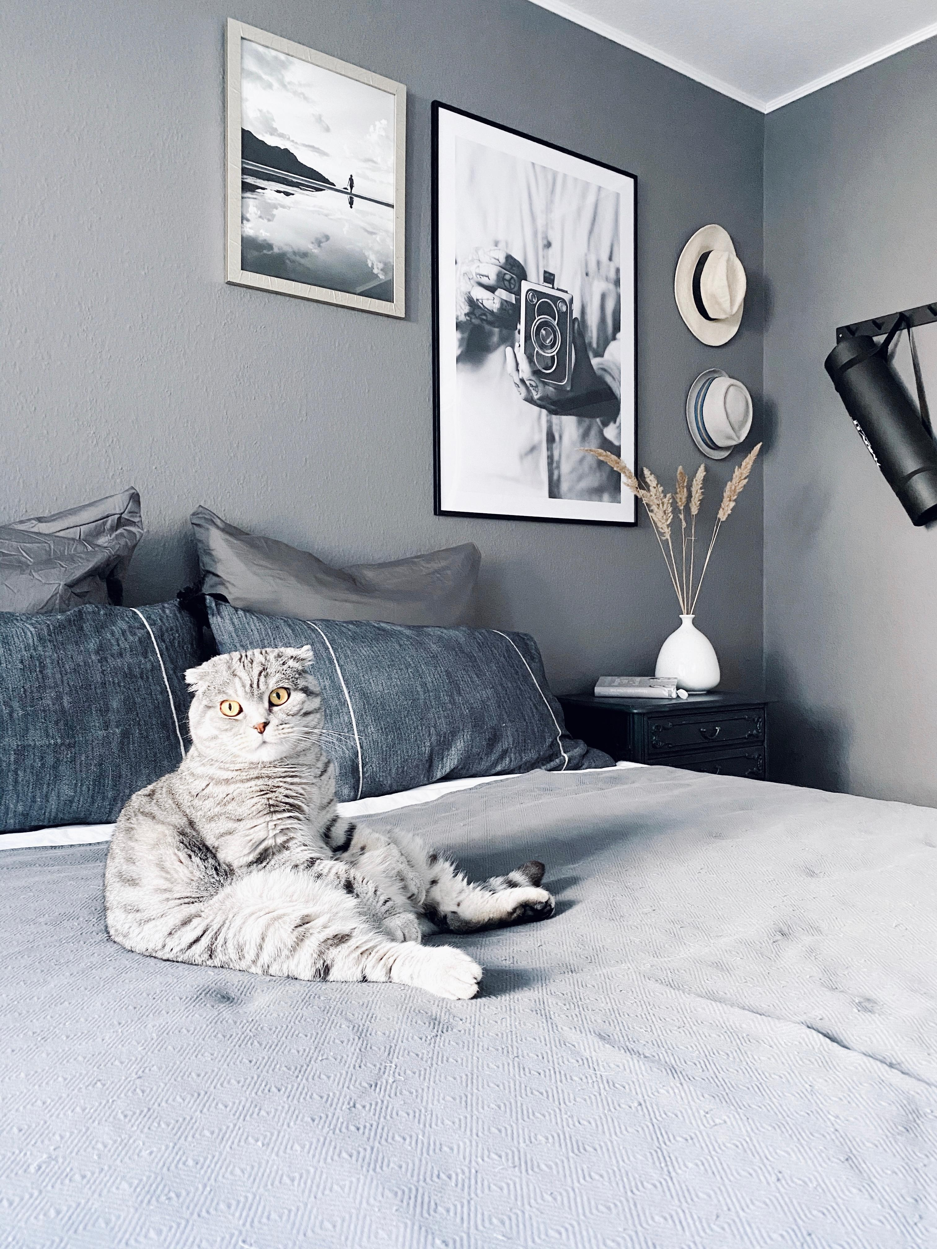 Happy Sunday! Hier ist #chillmodus angesagt ☺️ #bedroom #monochrome #catlover #sundaymood #nordichome #minimalistic