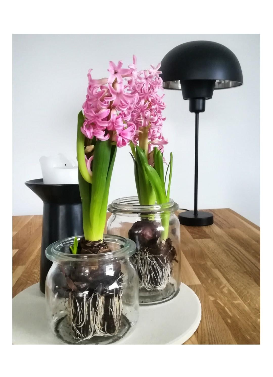 Happy sunny Wochenende :) #spring #interior #myhome #scandi #nordic #hyazinthe #goodmorning #weekend