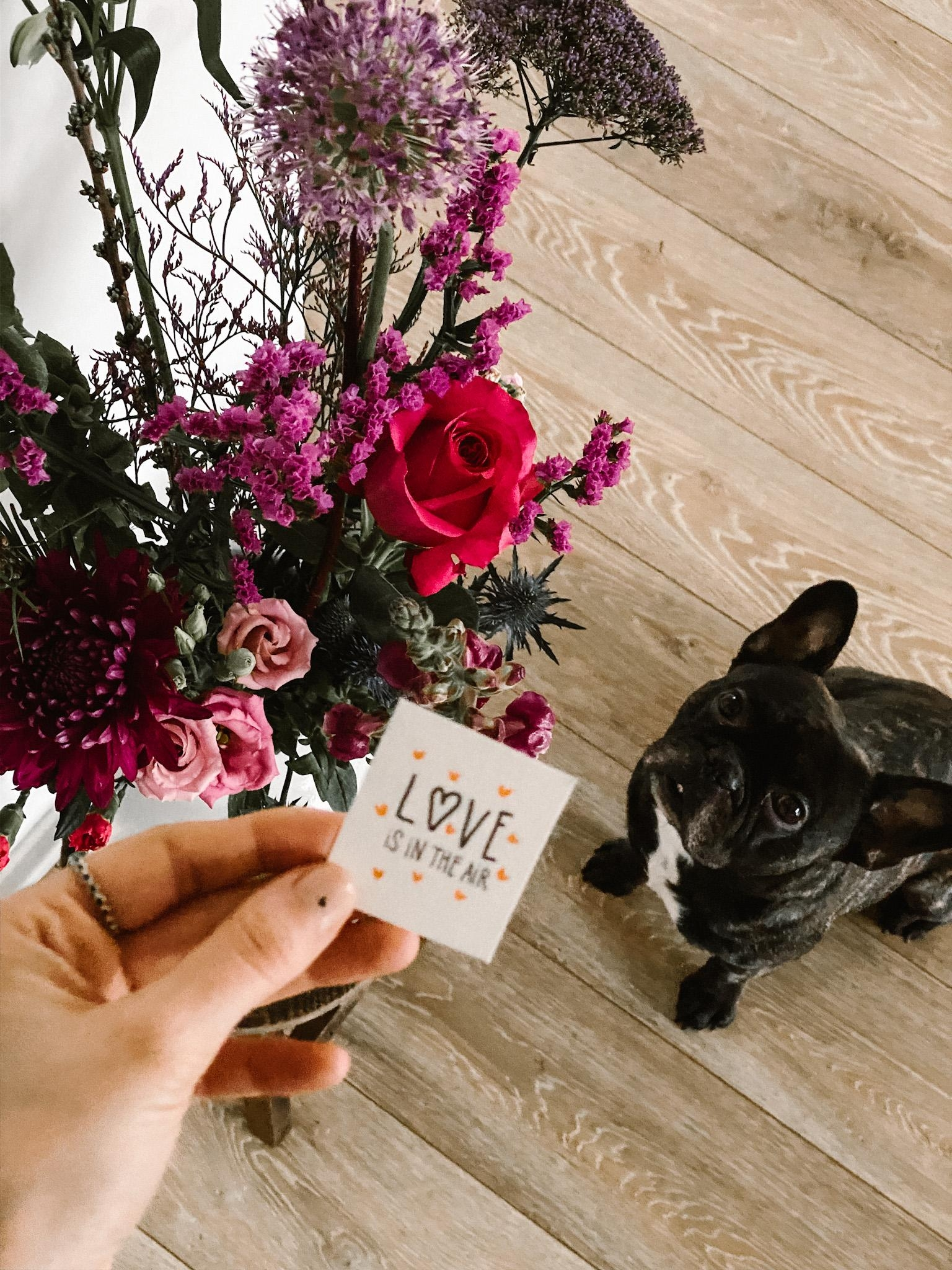 happy valentine's day, darling ♥️🐶