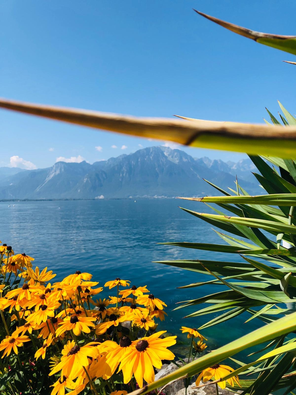 Happy Weekend ☀️🍦🙌