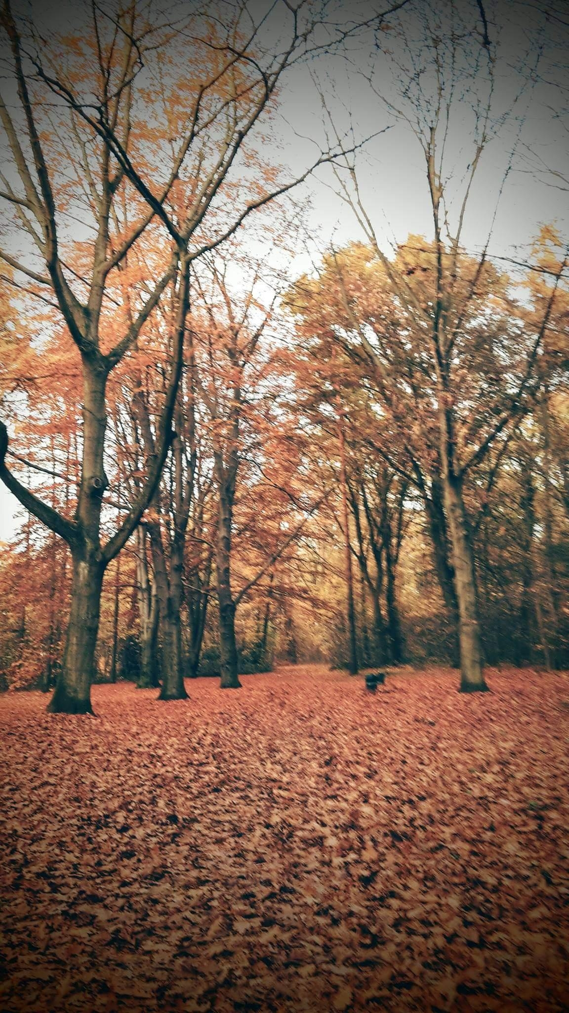 Herbstspaziergang im wald herbst wald spaziergang  7f677477 ab56 4e42 a61b 897f152e896f