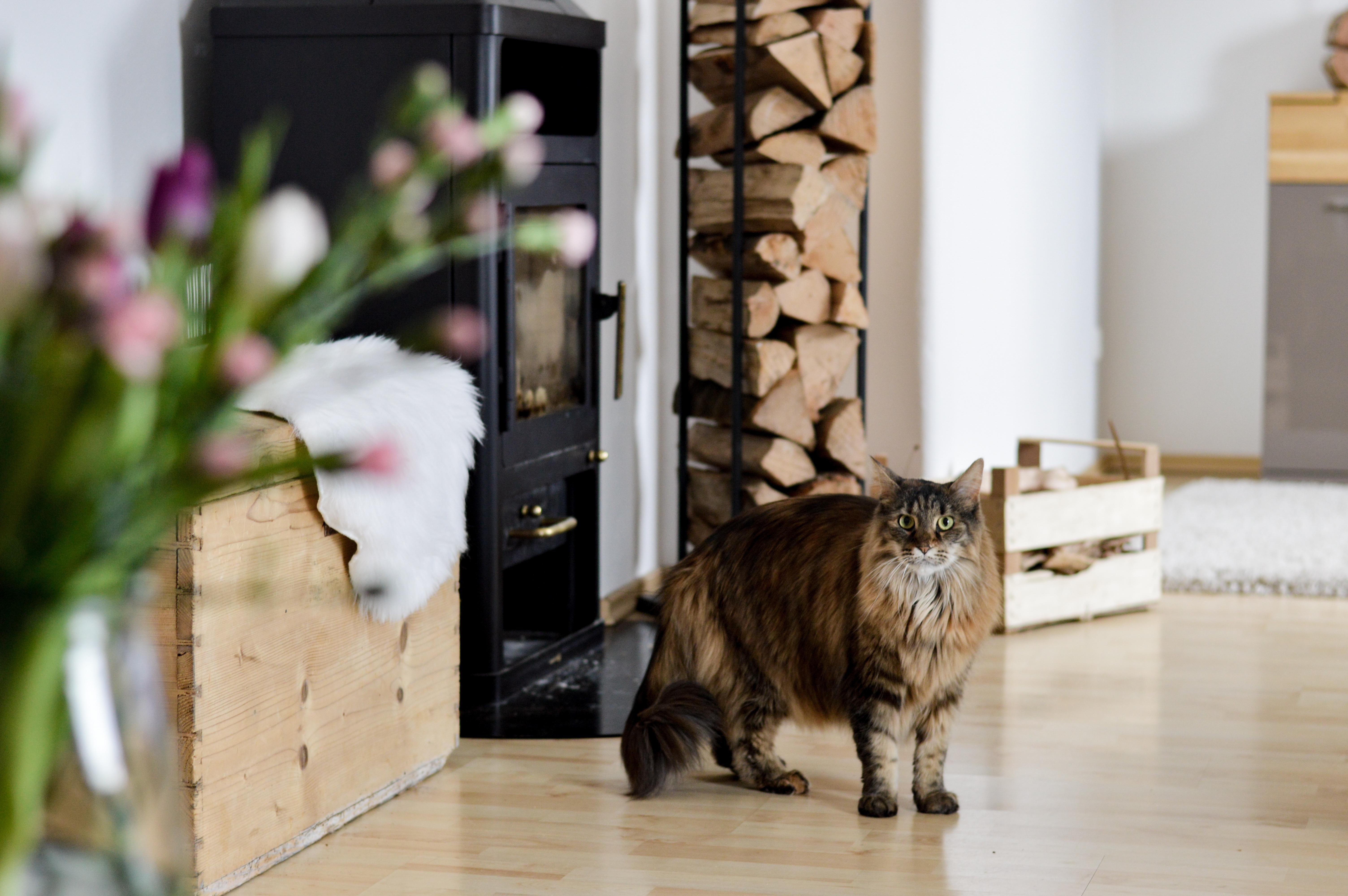 Hey Leute😘 #cat #wohnzimmer #livingroom #deko #bauerntruhe #kamin #