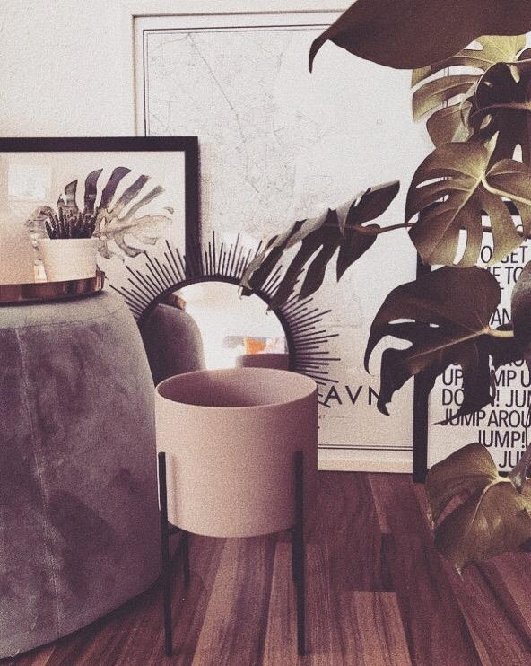 Home 🌿 