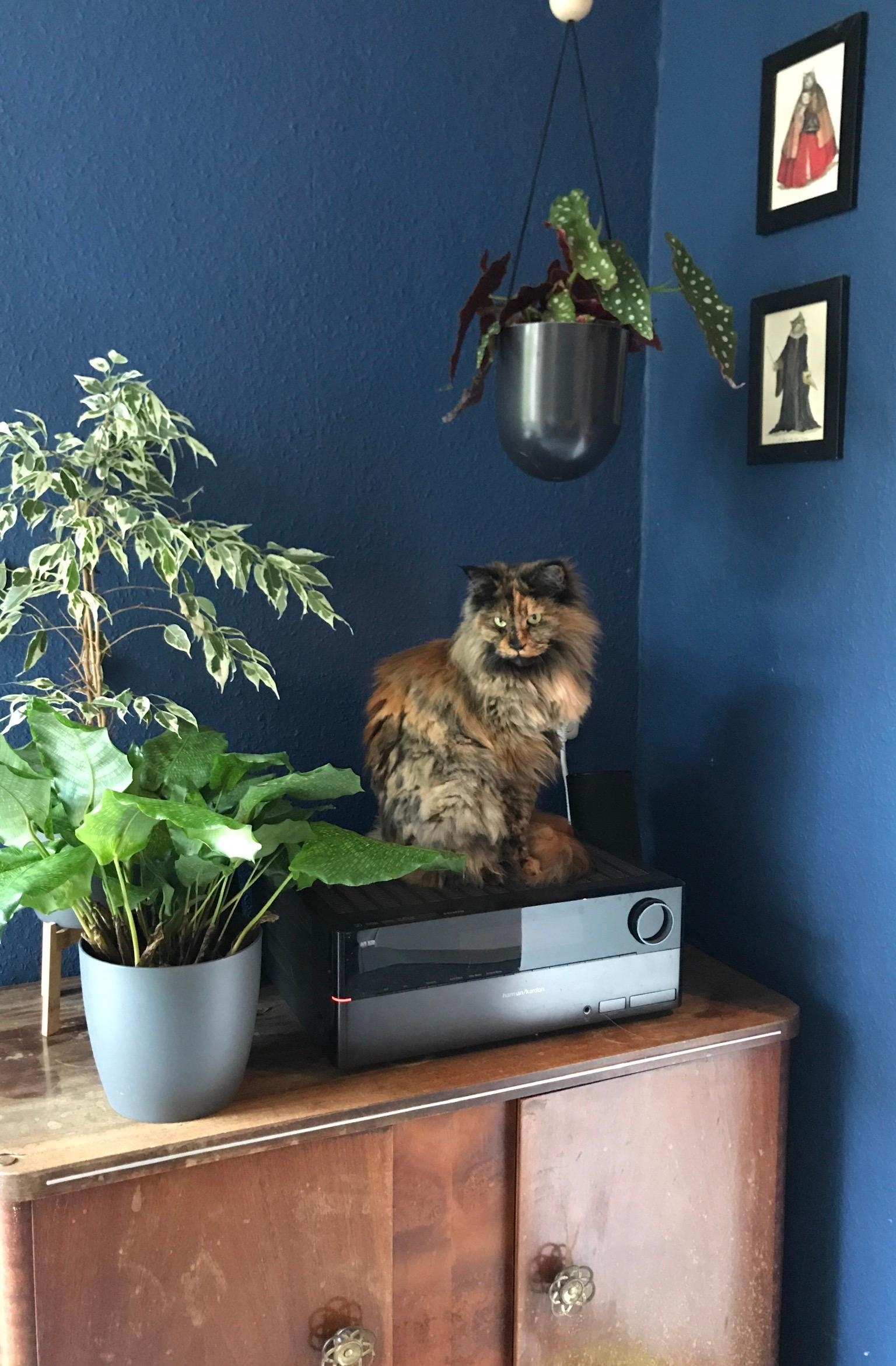 Home is where your cat is. And your plants. 🐱💚 #cats #küche #vintage #plantgang #urbanjungle