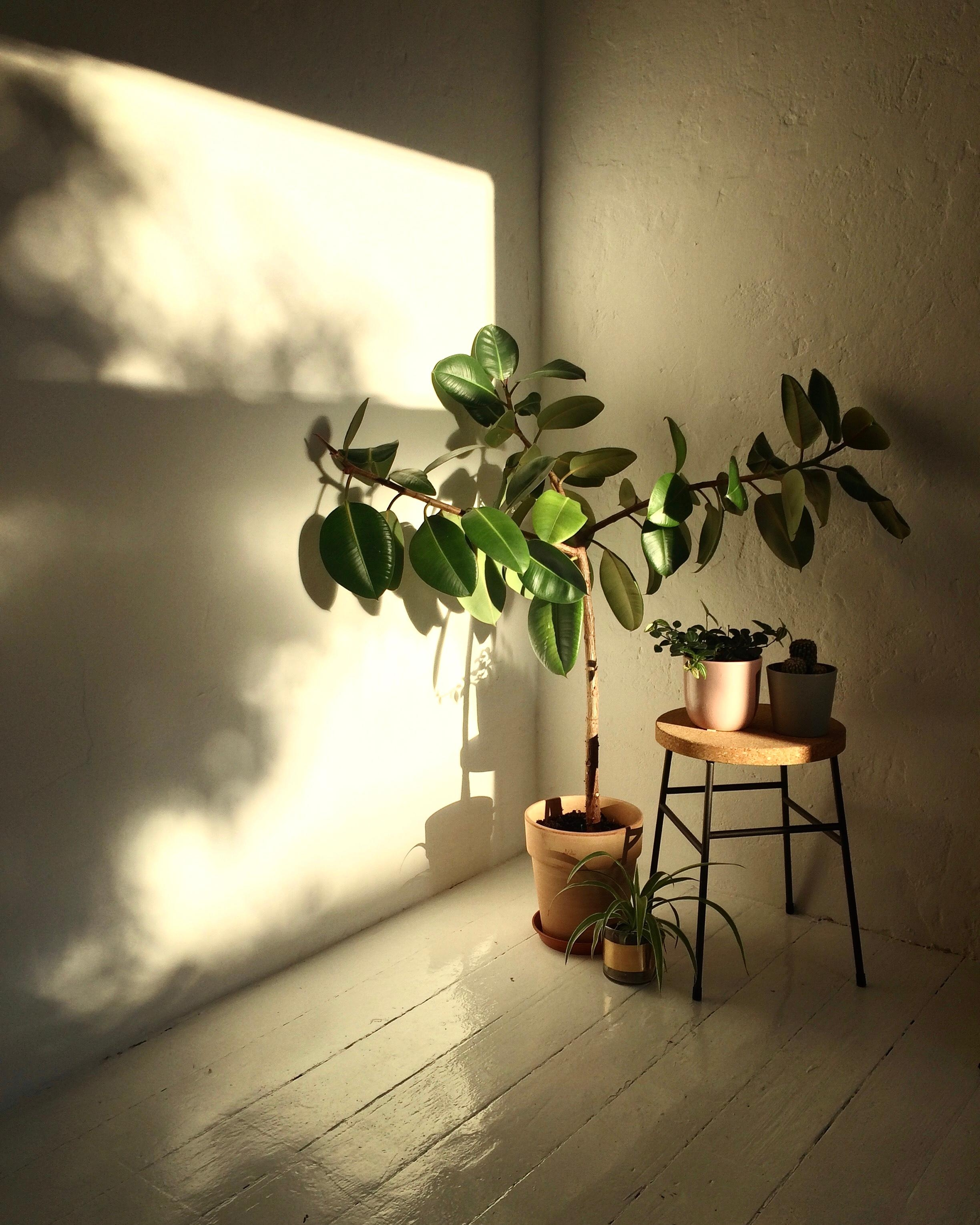 #home #pflanzenliebe #urbanjungle #plantlove #plants #interior #light