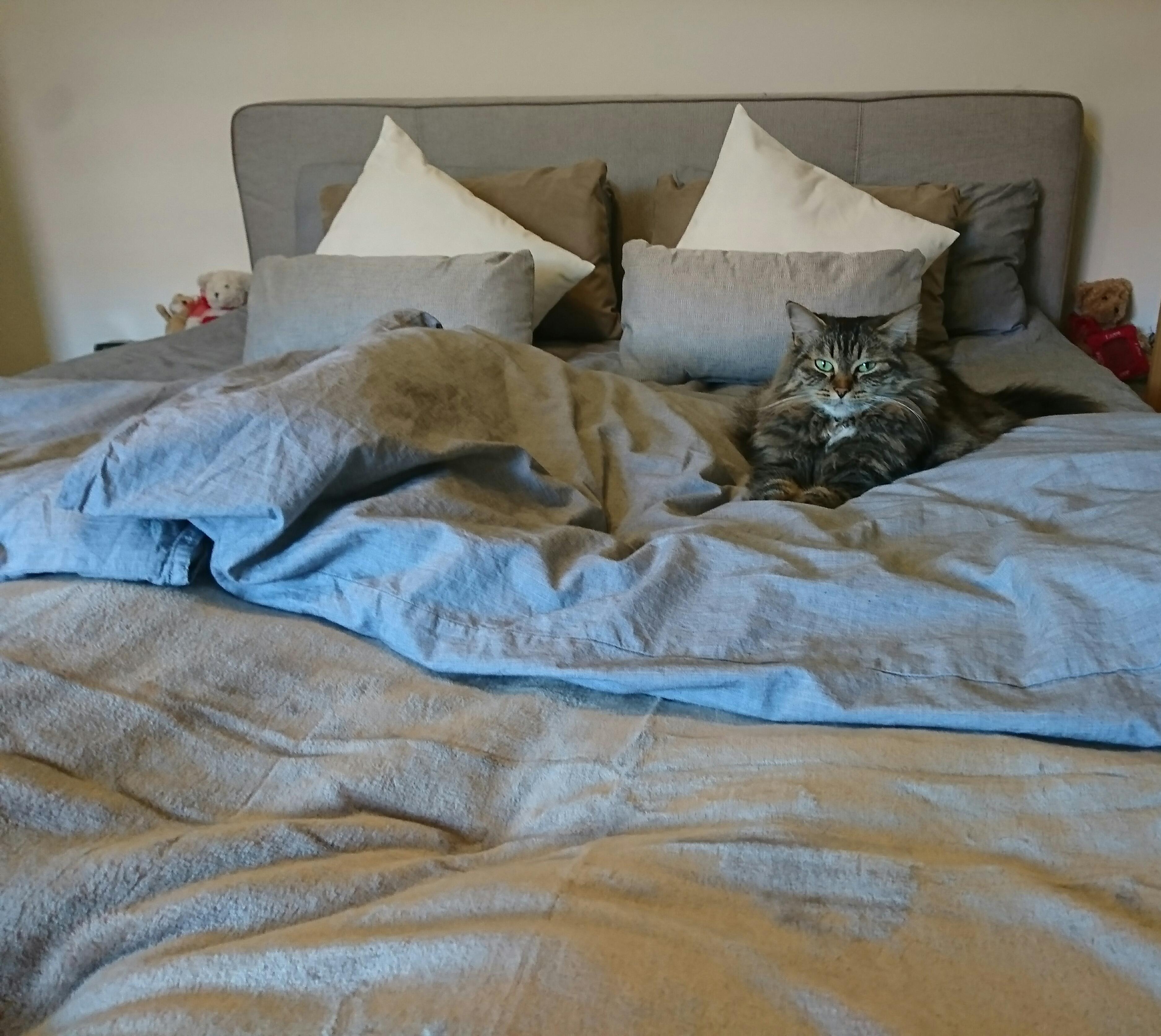 Ihr Revier :D #schlafzimmer #katze #kuscheln #grau ....