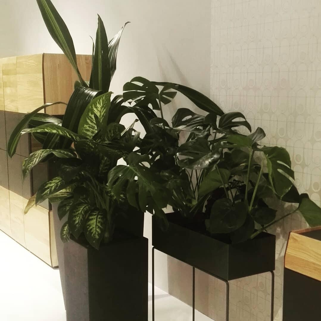 #immcologne #impression #scandinavianstyle #minimalistic #plants