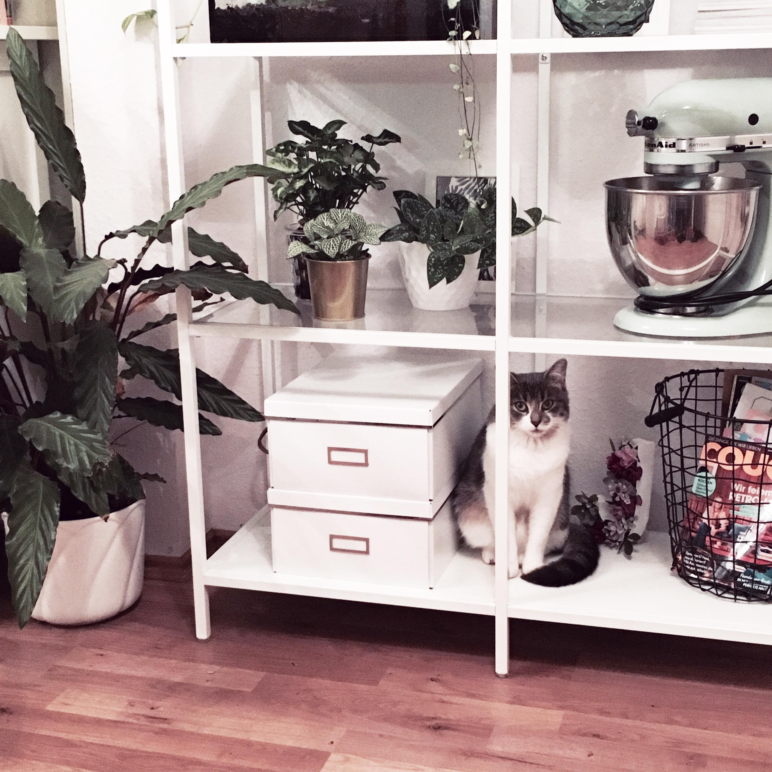 #interior #ikea #cat #interiordesign #kitchenaid