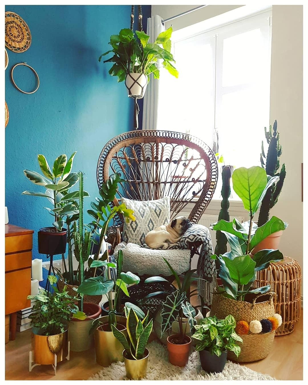 #jungle #plants #peacock-chair #livingroom #mops