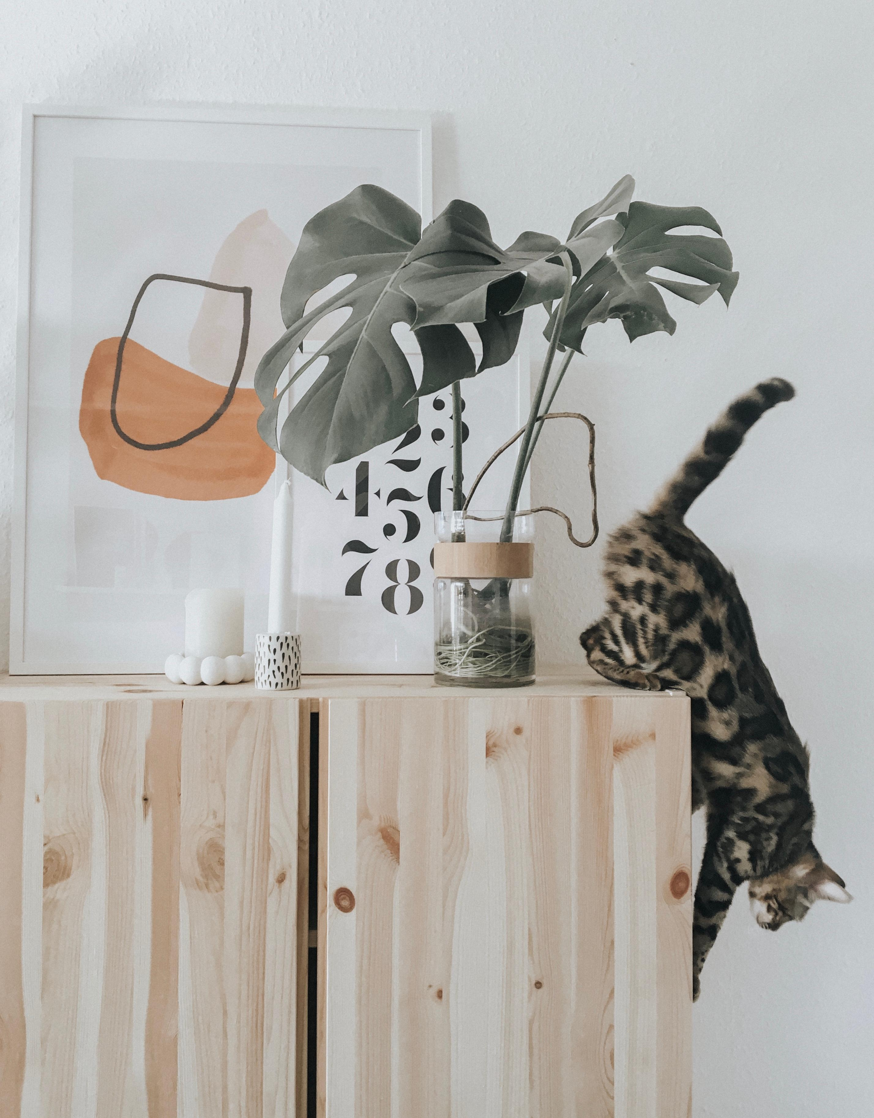 Karla 🧡