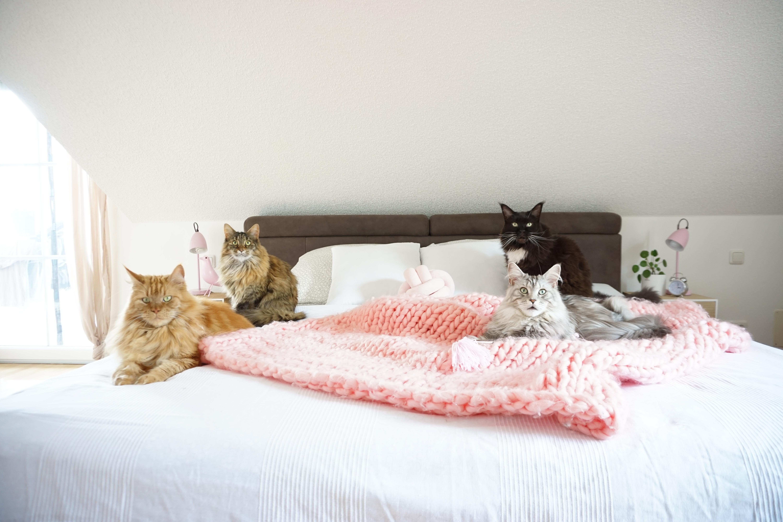 Kuschelig Bilder Ideen Couch