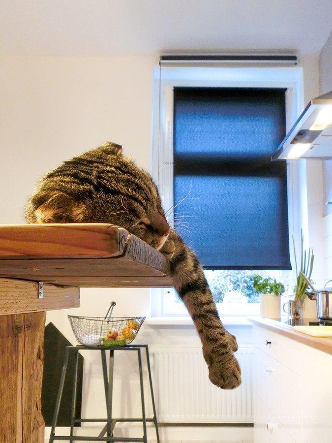 Katzentisch Katze Muesste Man Sein Dann Darf Man Fast Alles Sogar Auf Dem  Tisch Liegen Kueche