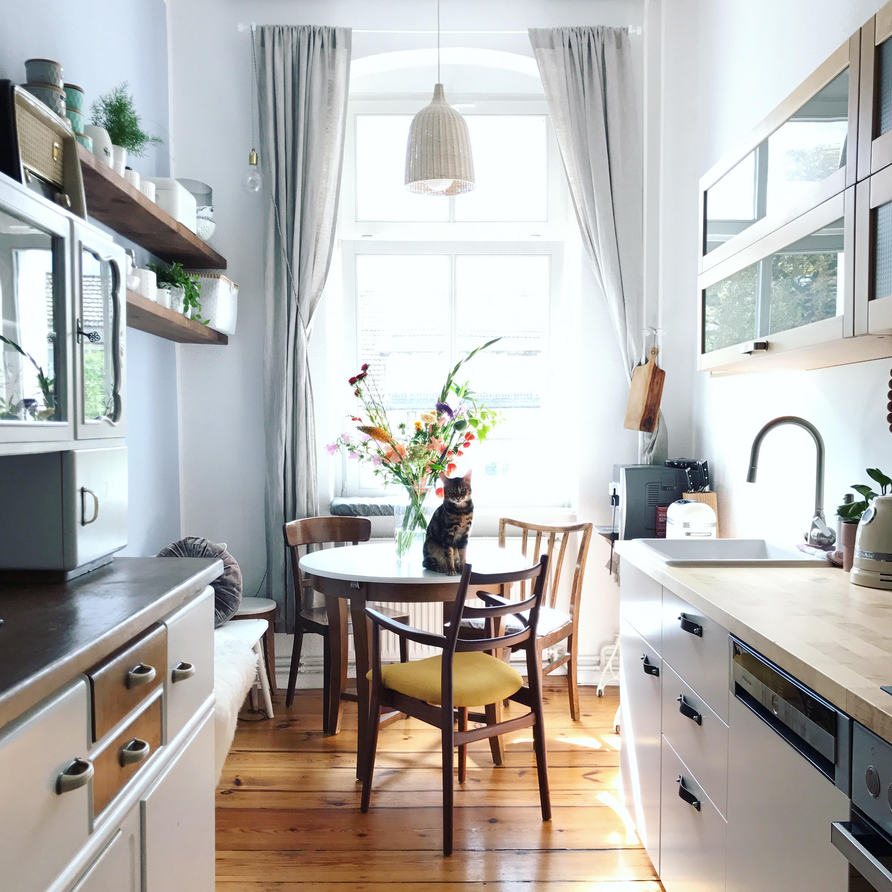 2 zimmer altbau in berlin mit flauschigen mitbewohne. Black Bedroom Furniture Sets. Home Design Ideas