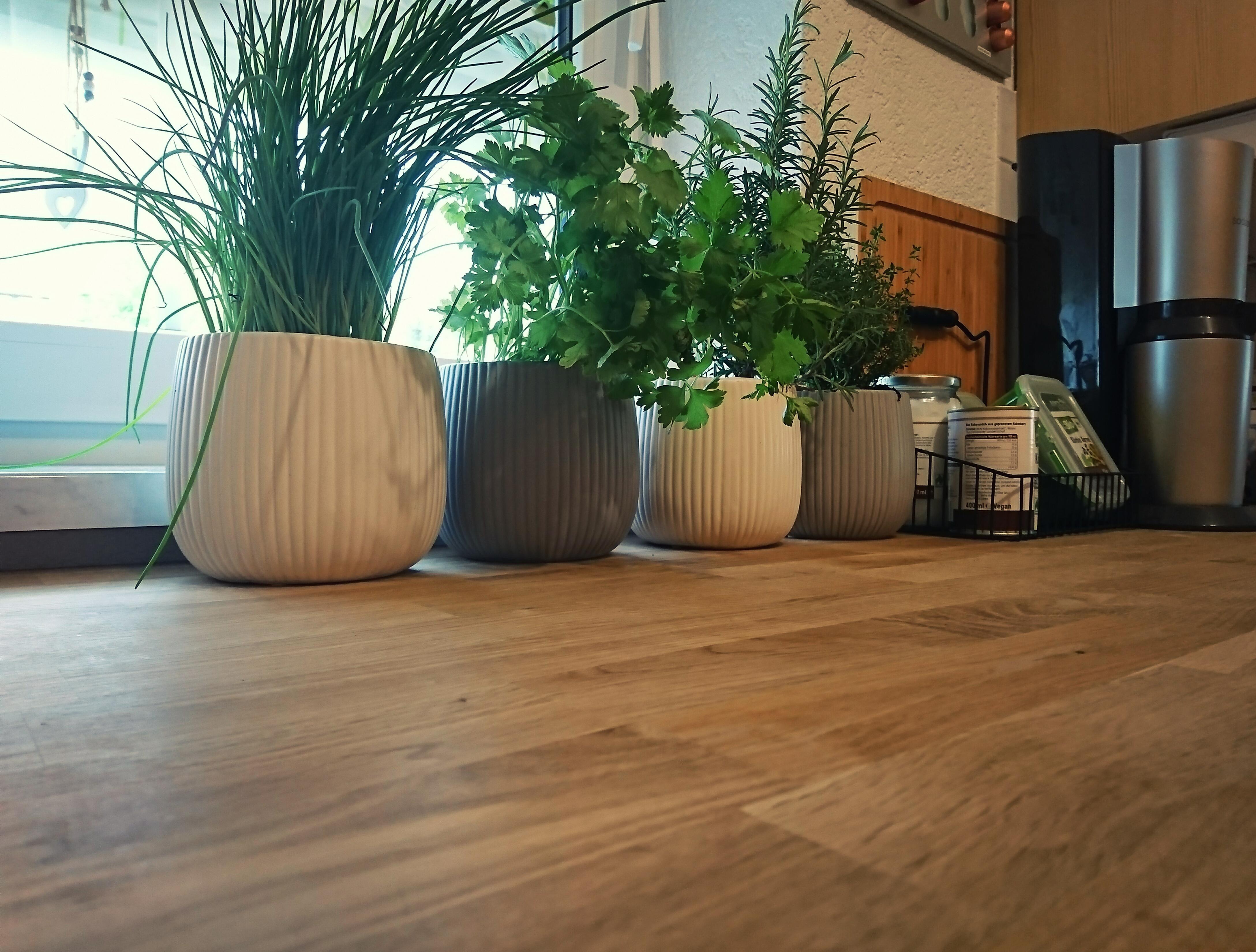 Kleiner Kräutergarten in der Küche #küche #kräuter #...