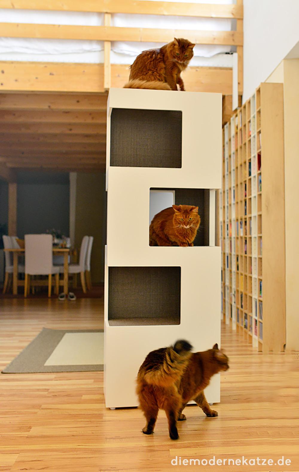 kratzbaum • bilder & ideen • couch
