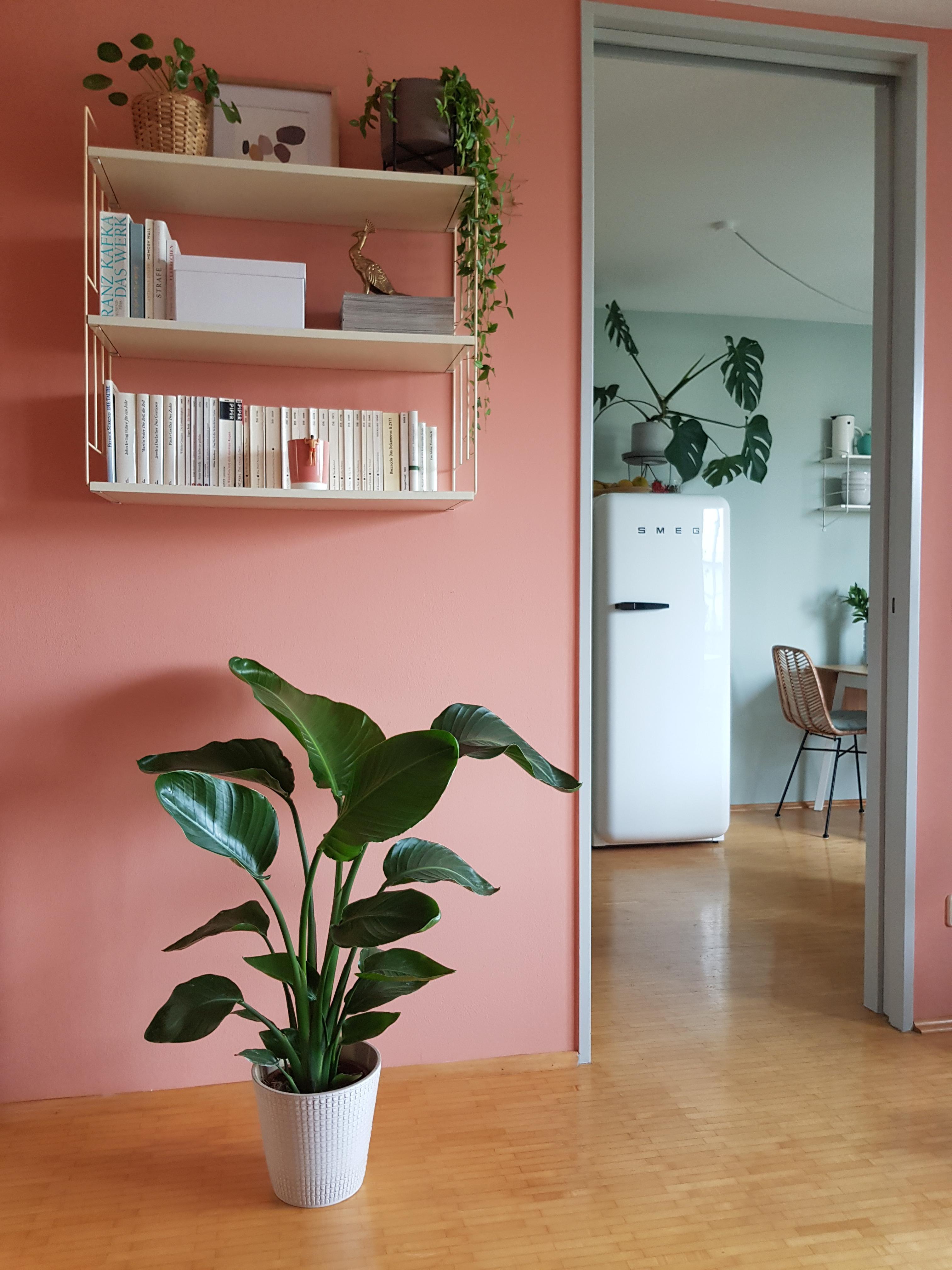 Kühlschrank: Einrichtungstipps und Gestaltungsideen!