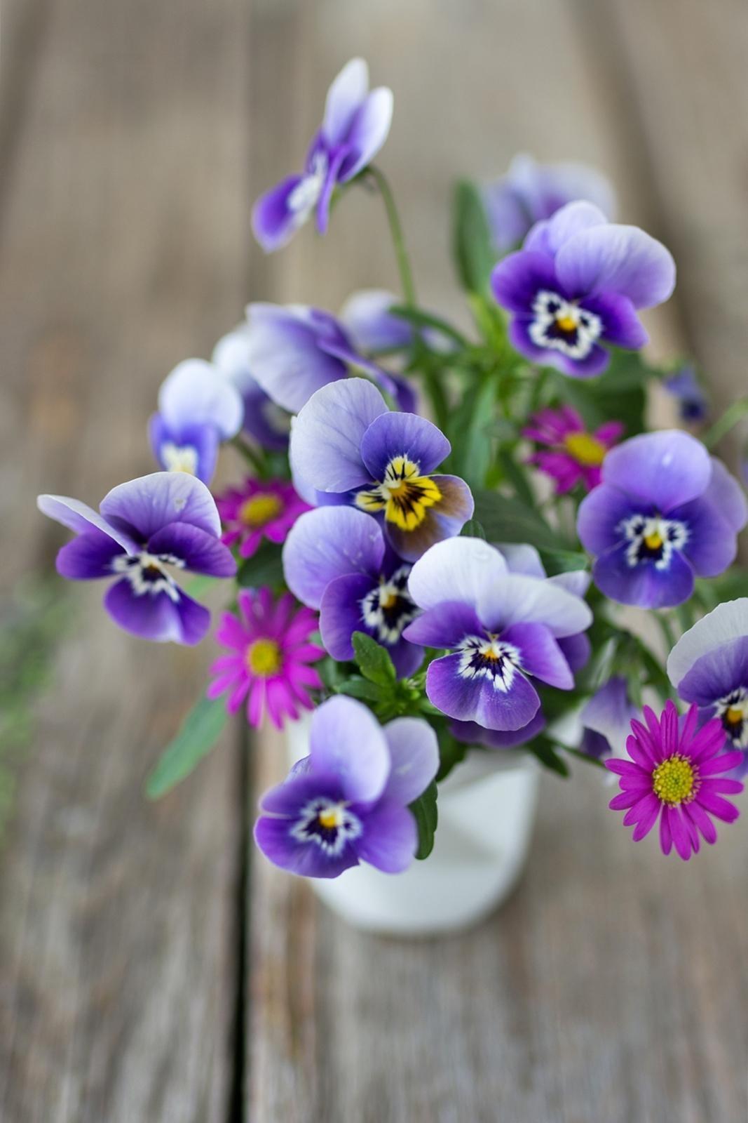 Lieblingsblumen Im Mai #stiefmütterchen #flowers #blumenliebe #deko