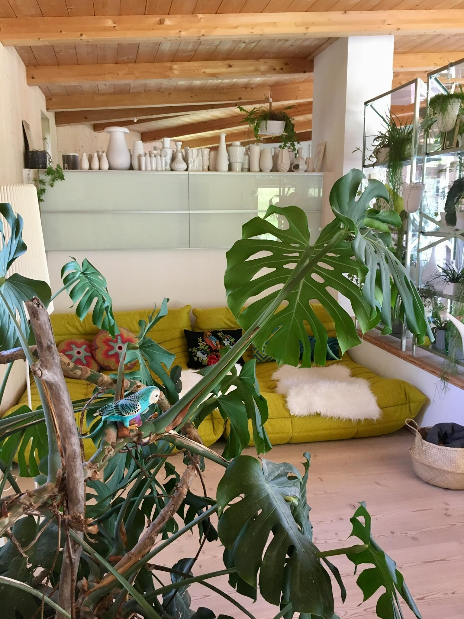 living in the jungle #greenliving #wohnzimmer #urbanjungle #sofa #lieblingsecke #monstera