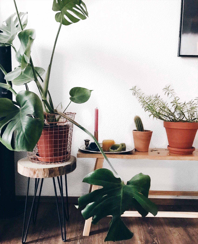 living wohnzimmer deko flowers plants interior wood couchliebt